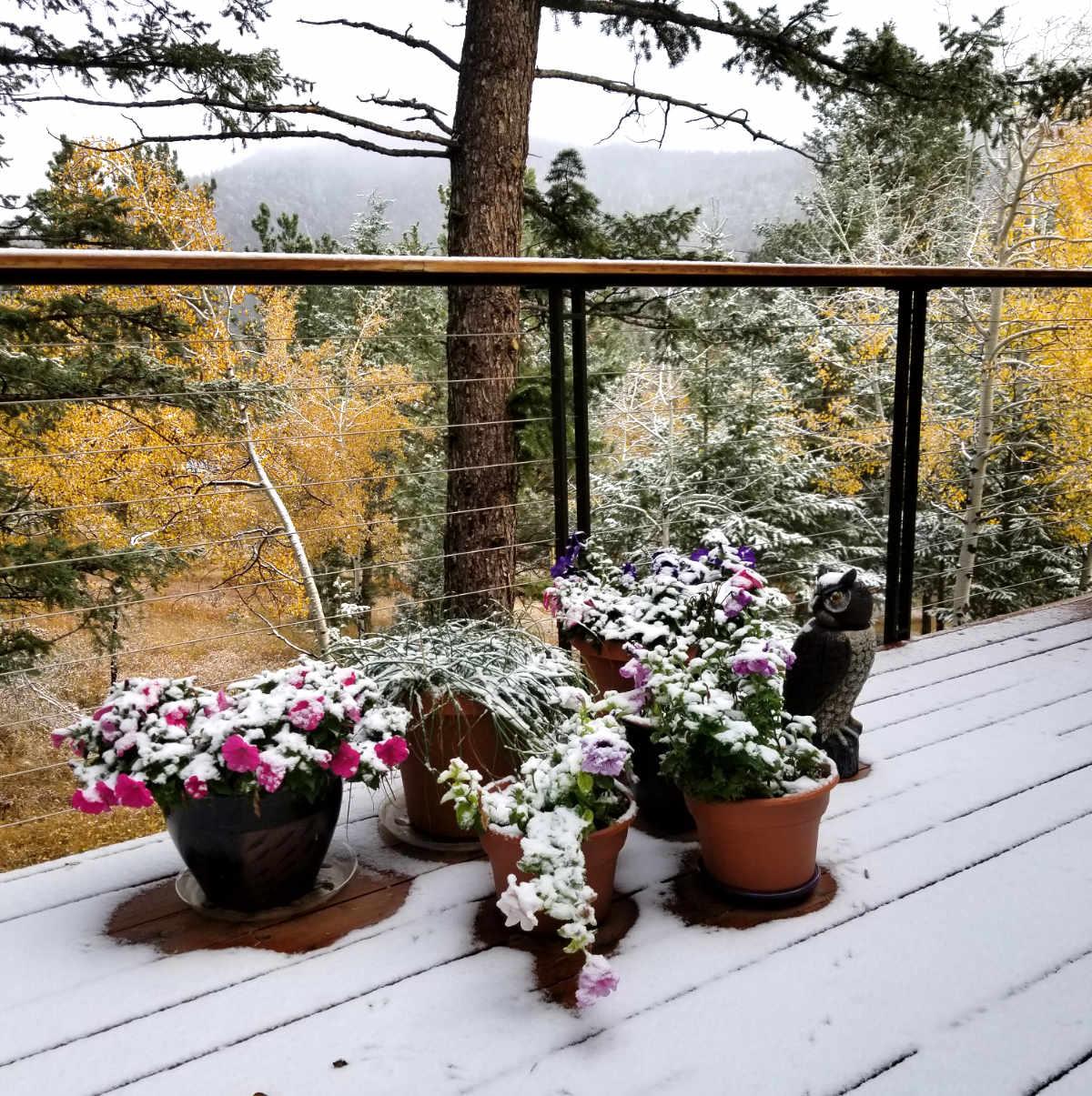 First Snow in Estes Park