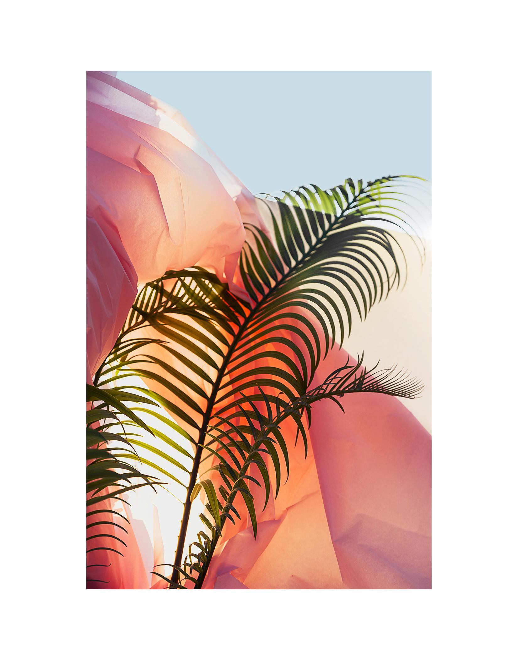 "Palm on Plastic/ La Habra, CA    by Rachelle Mendez, $1,150  20"" x 16"" x 1"""