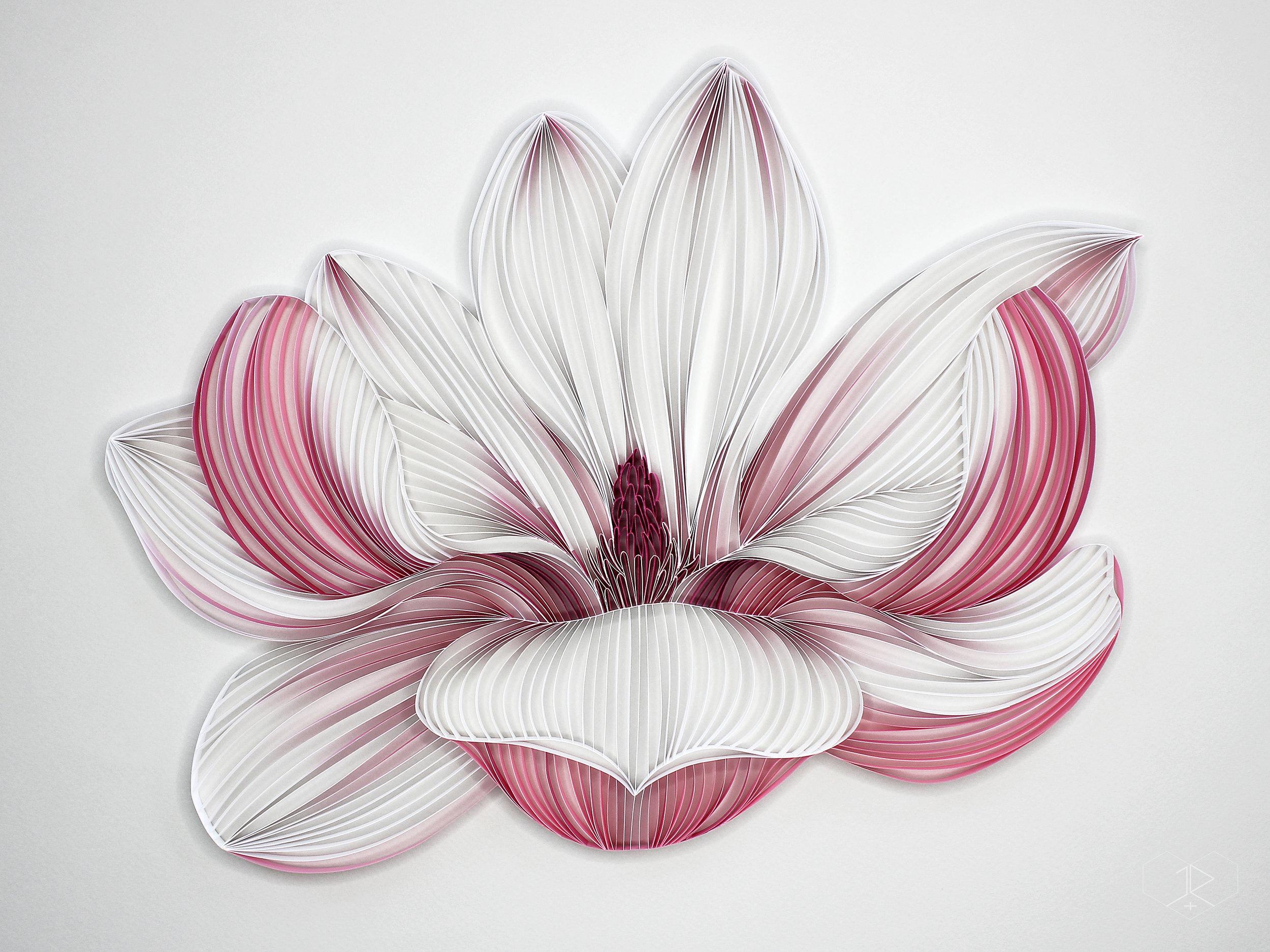 JUDiTH+ROLFE_Flora_Magnolia.jpg