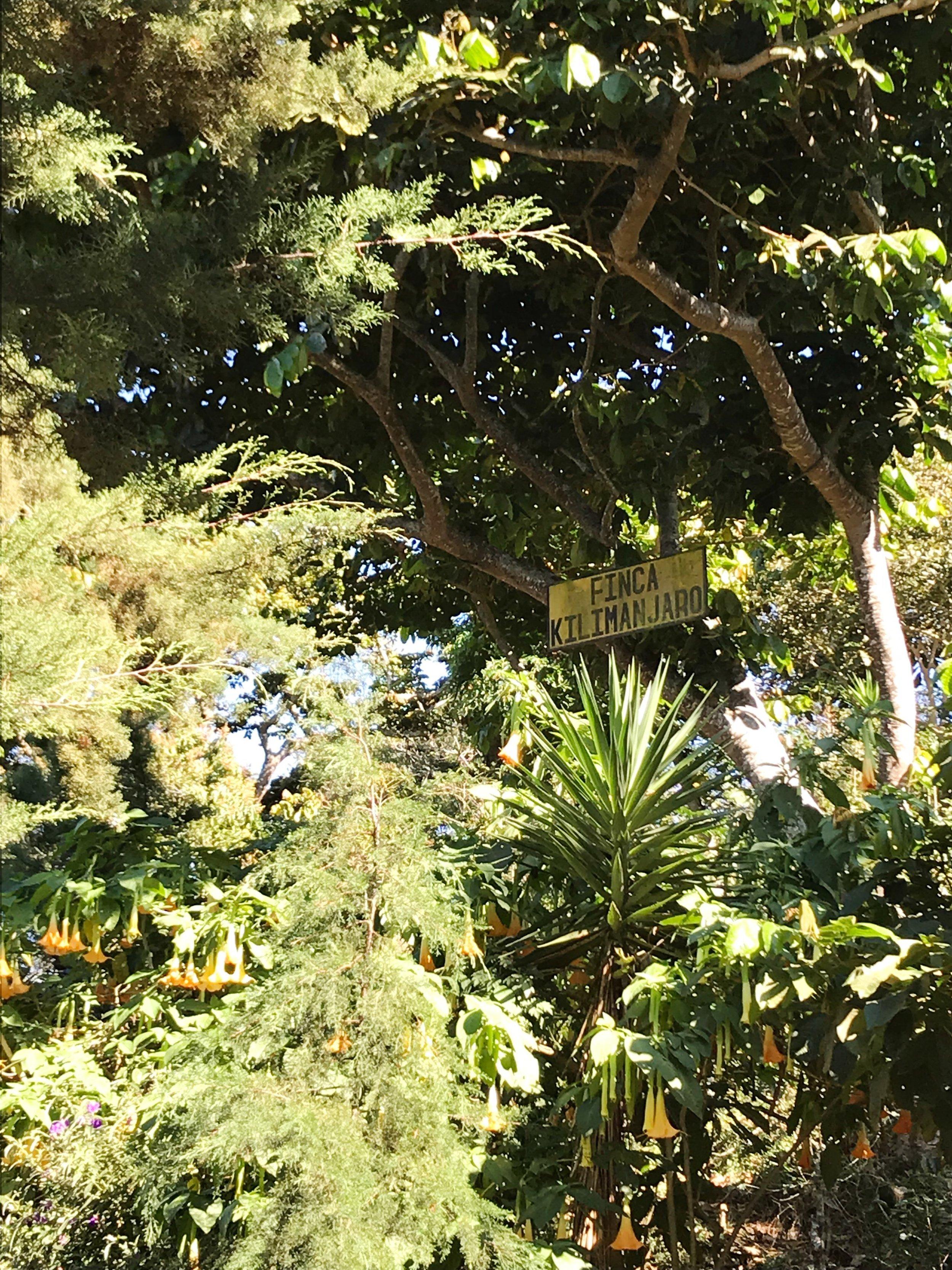 finca_kilimanjaro_farm_border.jpg
