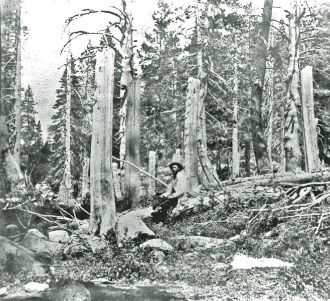 After the thaw, the camp where the Donner Party was trapped claimed to have had 22 ft of snow. The tops of these trees would have been the ground, where they chopped wood for warmth.