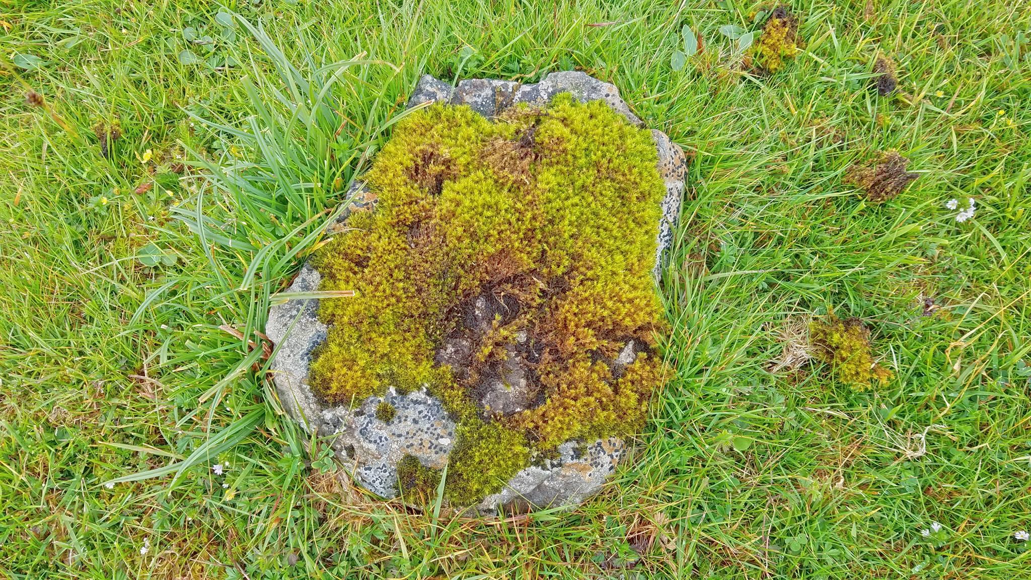 Dun Hallin Stone Moss.jpg