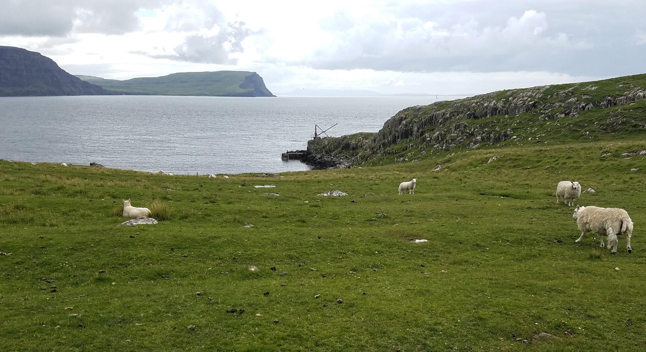 Neist Point Sheep and Moonen Bay