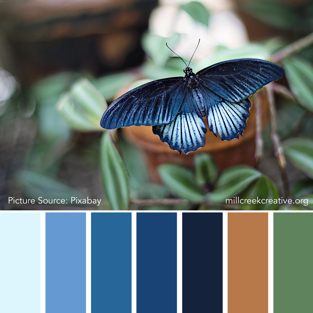 Blue Butterfly | Color Palettes for Design Inspiration | Mill Creek Creative