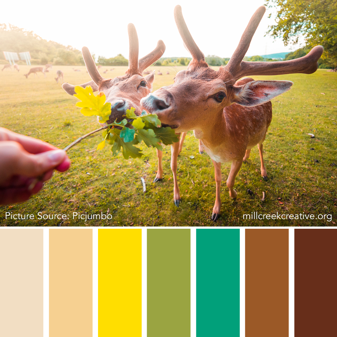 Fallow The Leader | Color Palettes for Design Inspiration | Mill Creek Creative