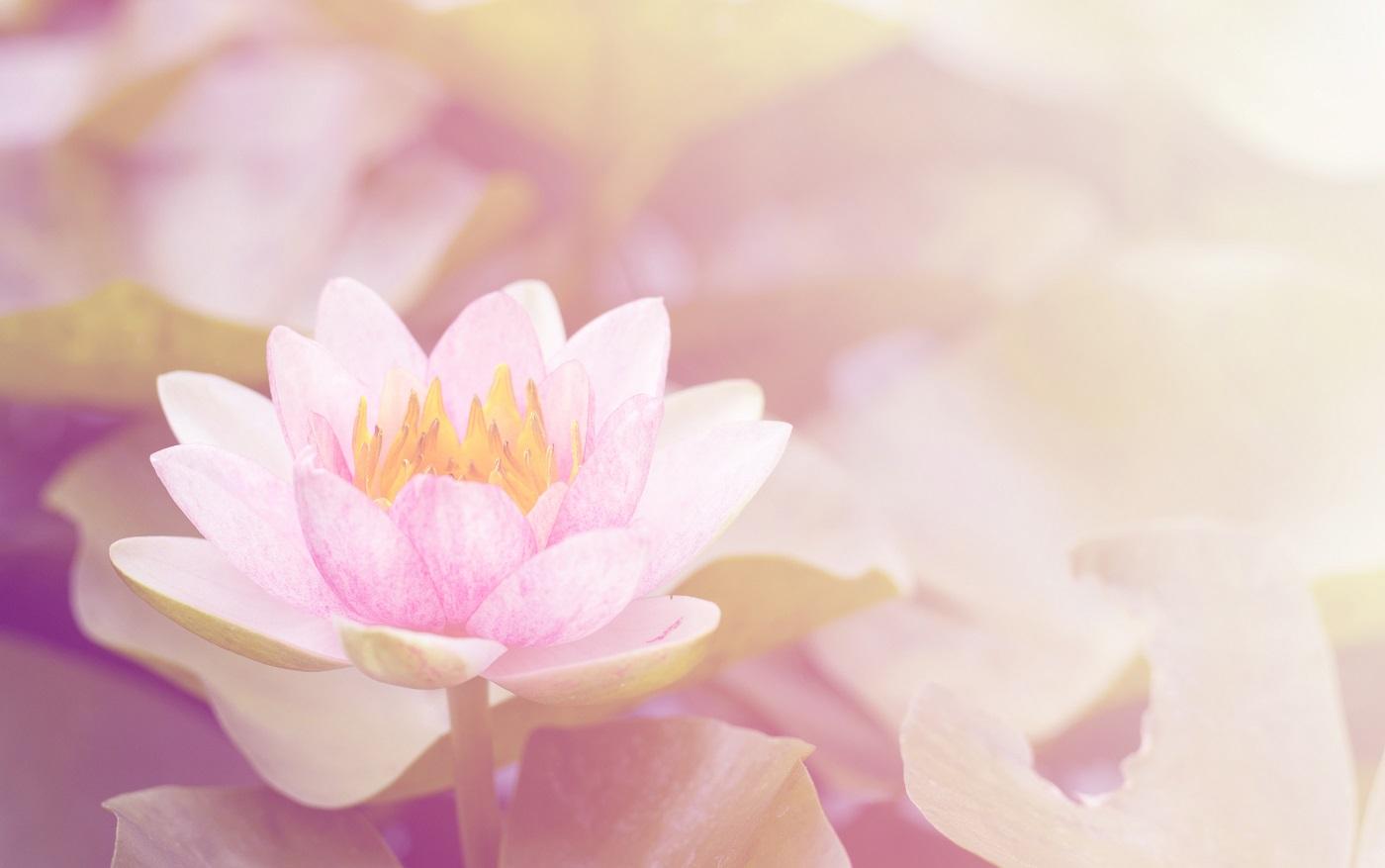 Jaya Sarada Energy Healer Instructor, Advanced Energy Healing