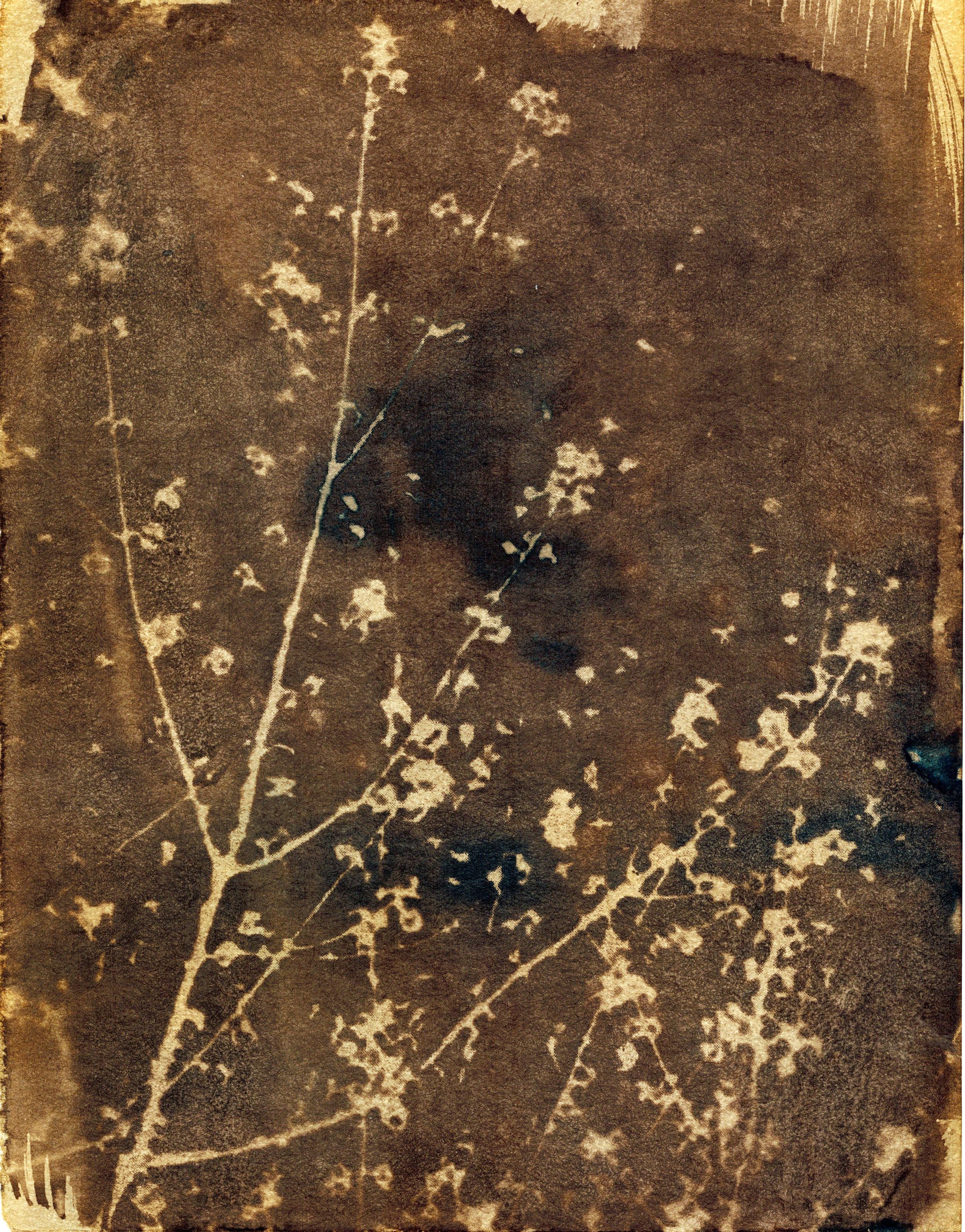 Toned Garden Cyanatope