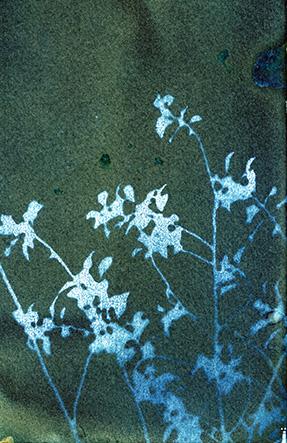 Blue Revealed Floral