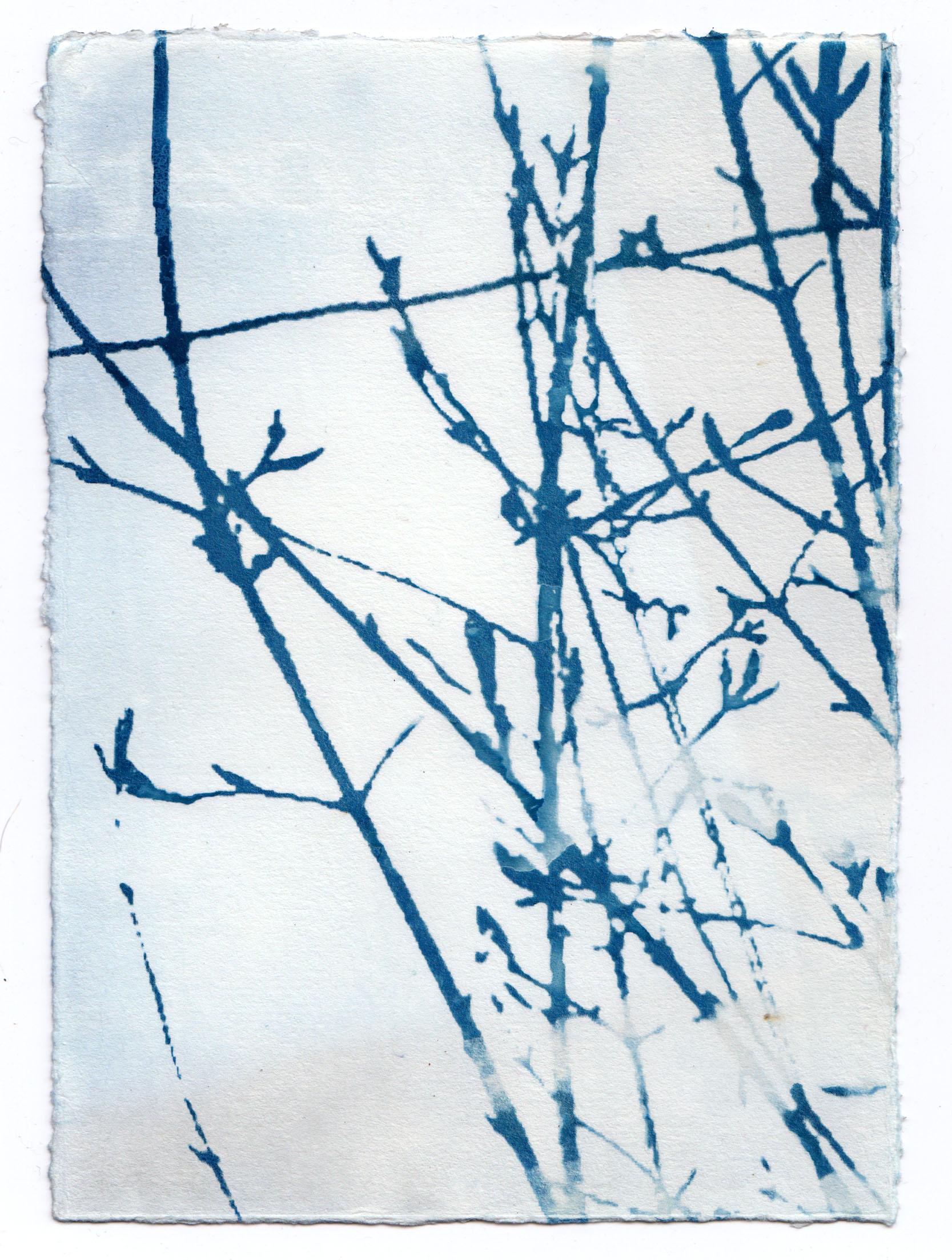Blue Traces