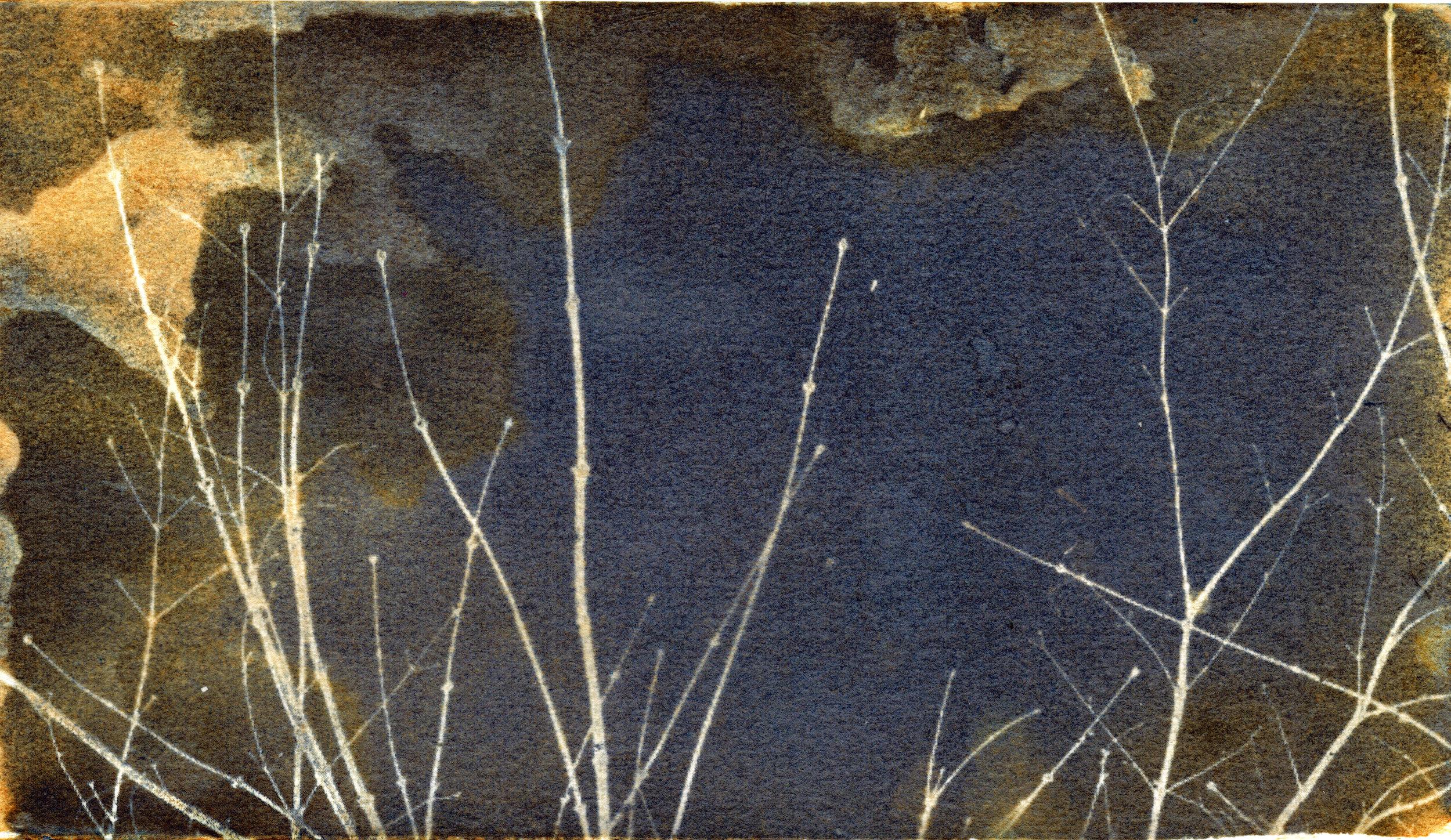 Mottled Twigs