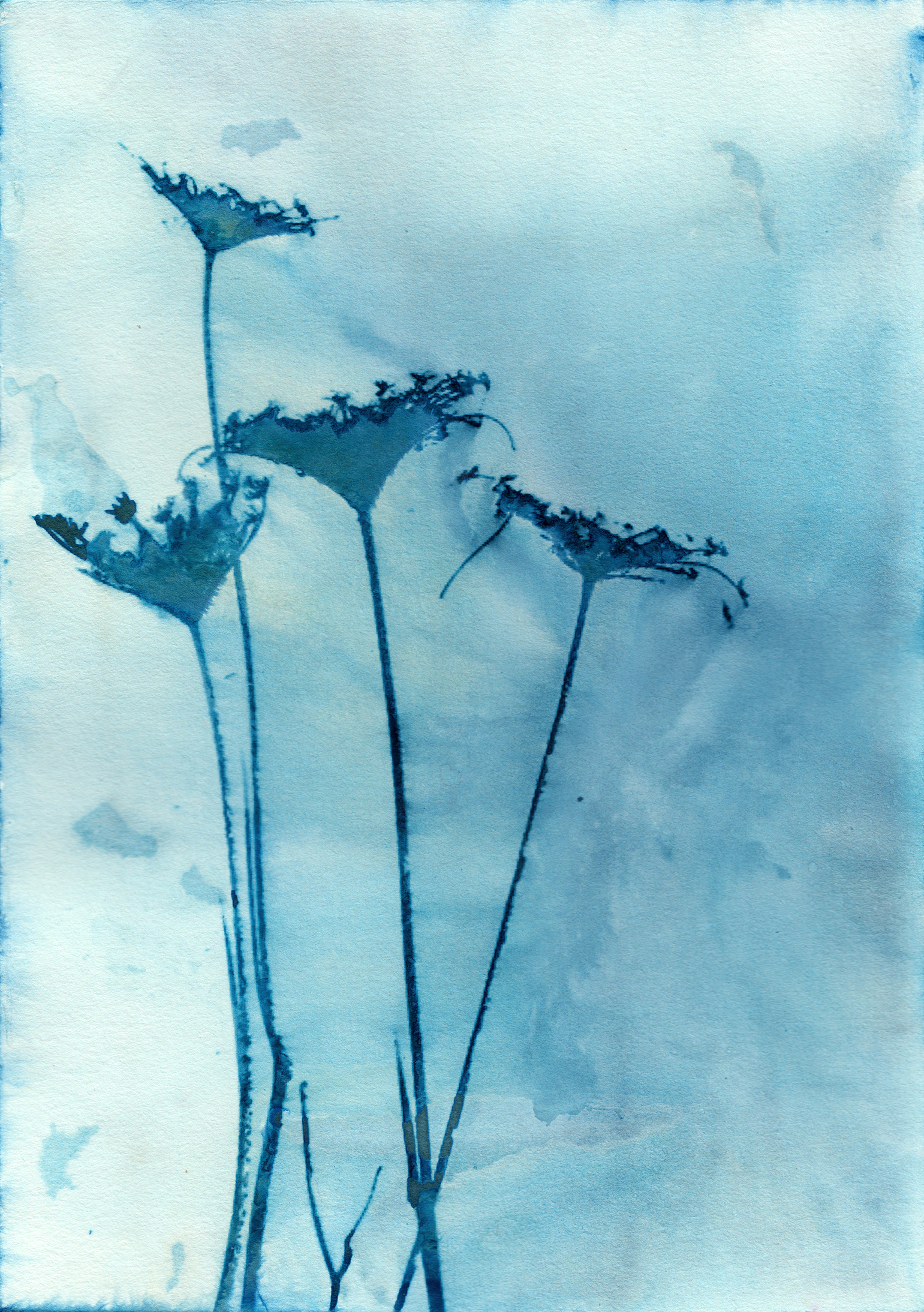 Blue Anne
