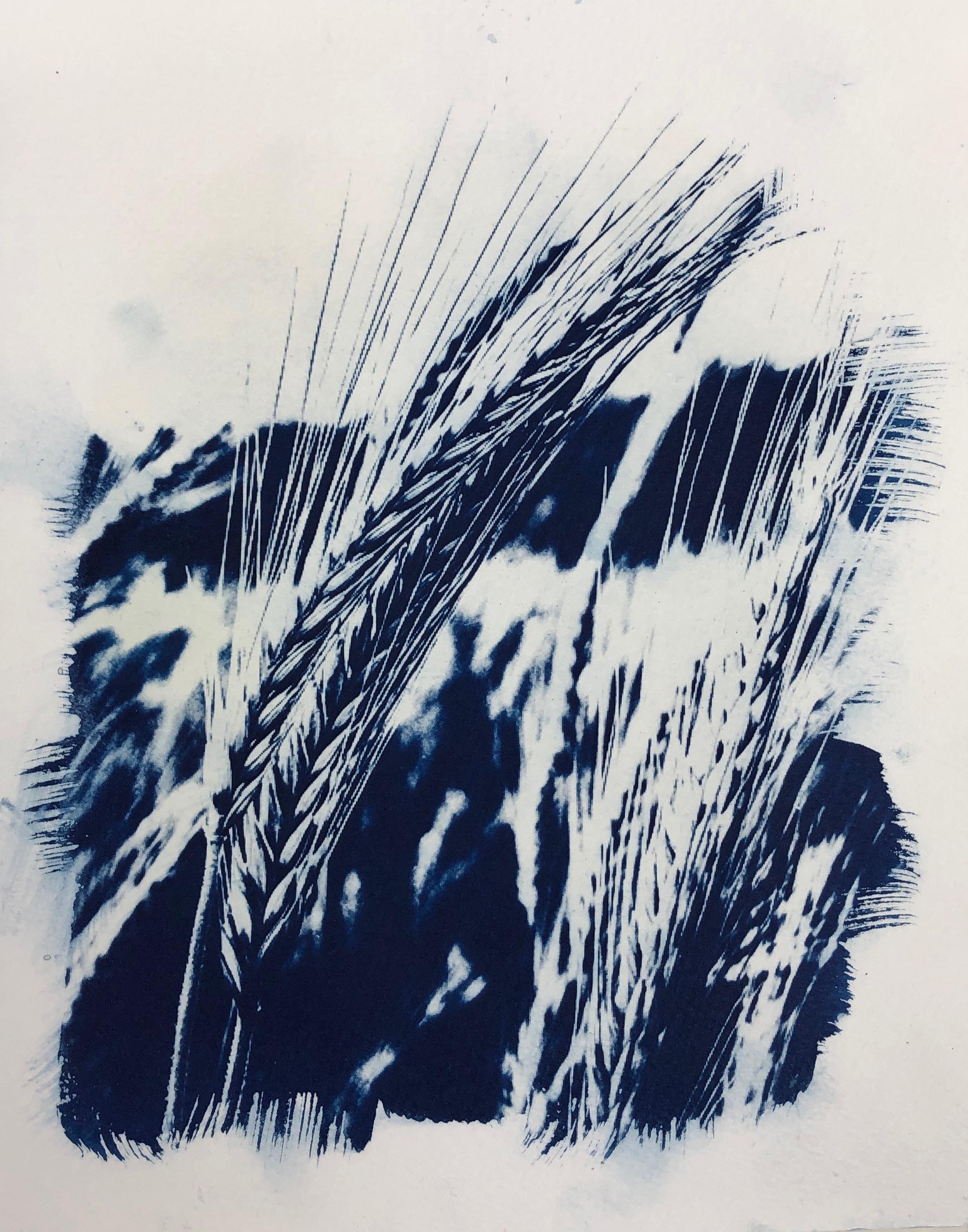 Barley 4