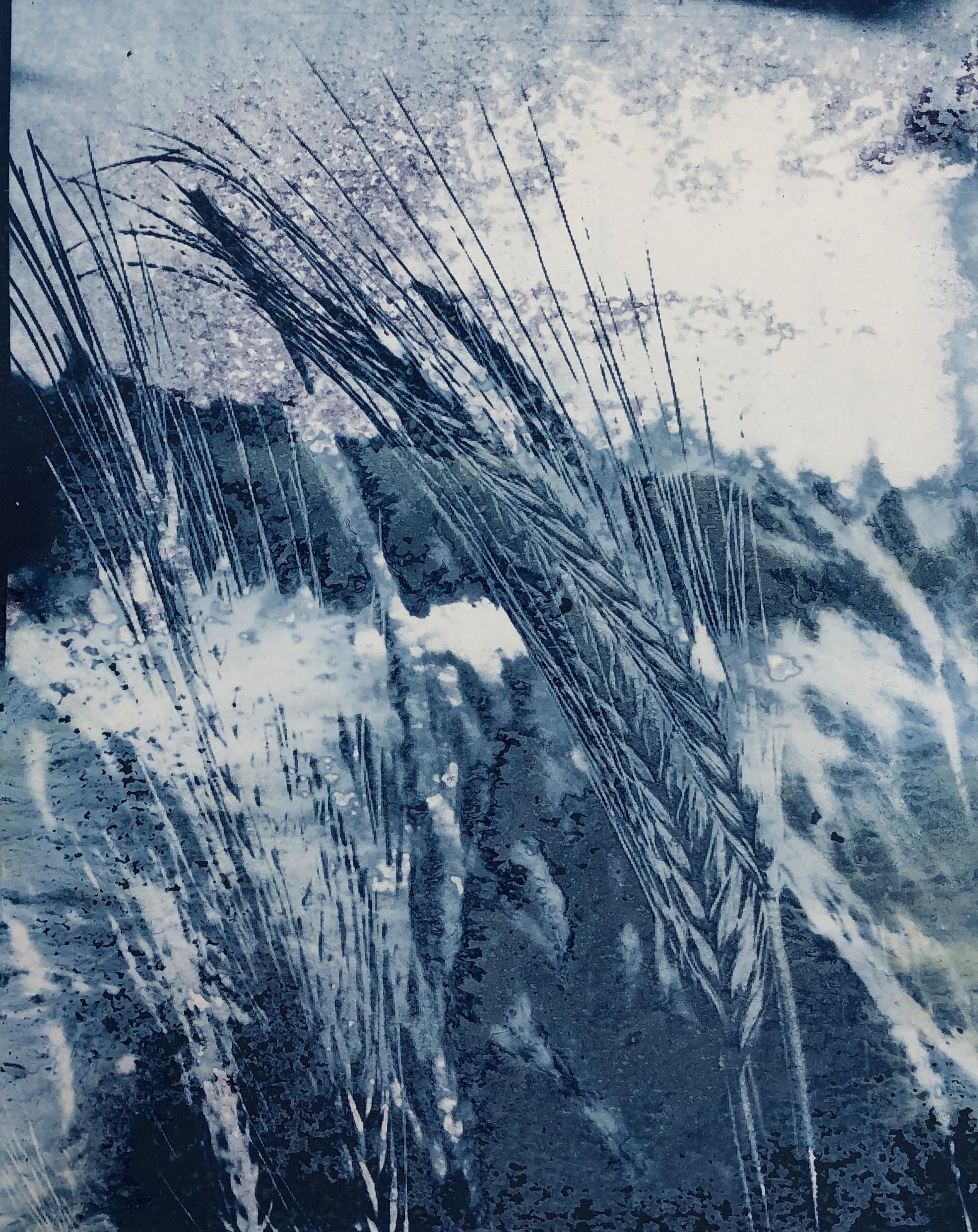 Barley 7