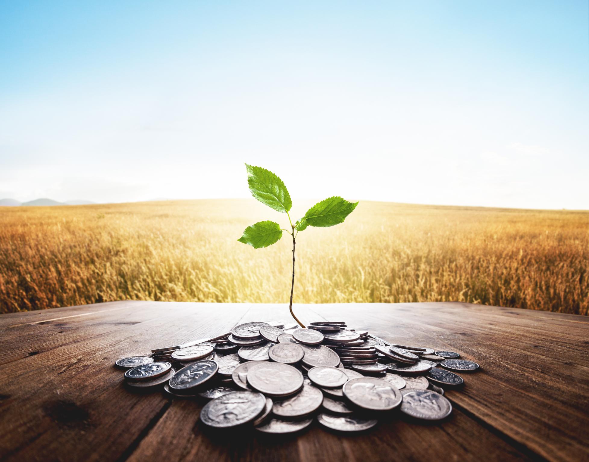 Investment Management -