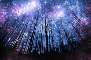 mind-celestial forest sky.jpg