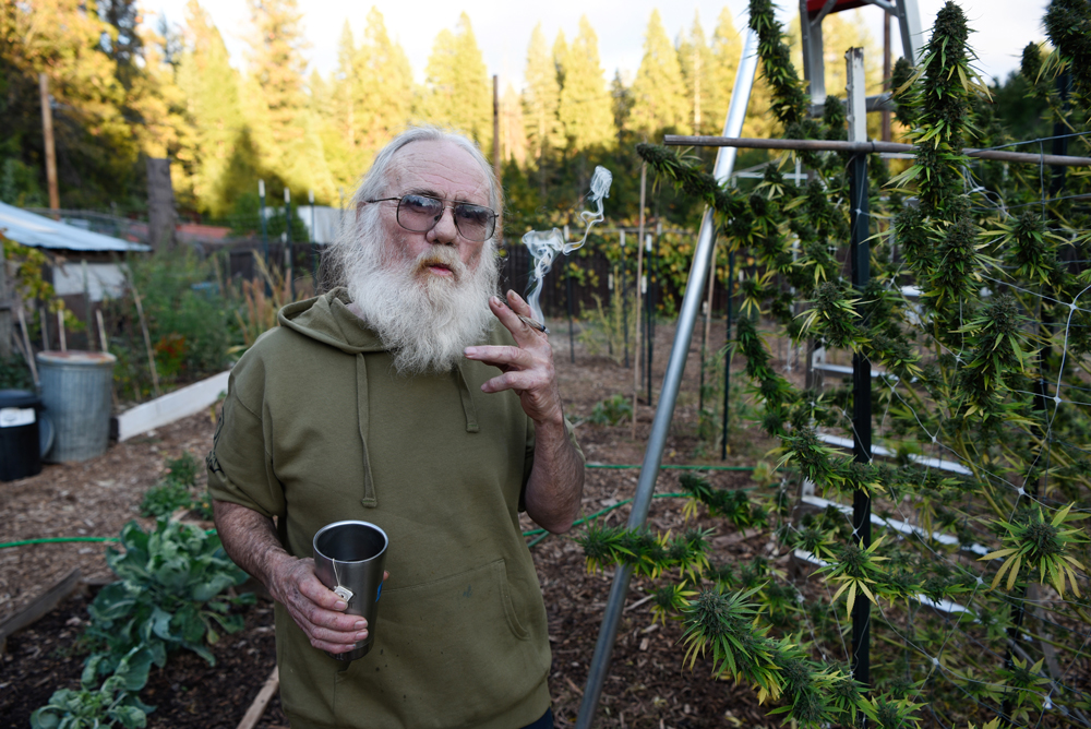 """Wade Laughter has championed a strain of cannabis high in CBD content called """"Harlequin"""" for its healing properties"""