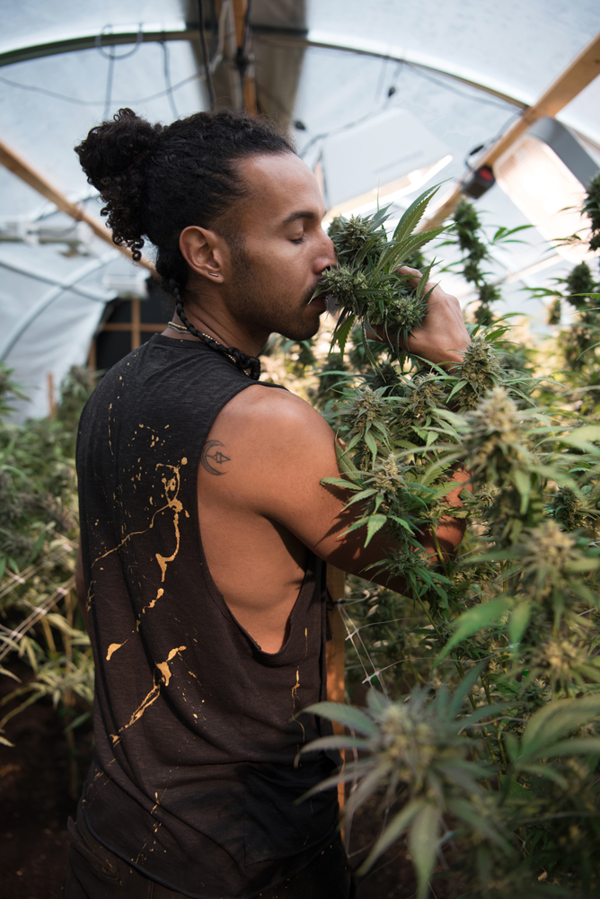 """Taiga Leigh from Trinidad, a small scale organic farmer in Grass Valley, has been cultivating cannabis since he was 10 years old. We asked him what his secret for growing good weed is: """"My plants only listen to Midnight, a really big reggae band from St. Croix. They were grown on Midnight. """""""