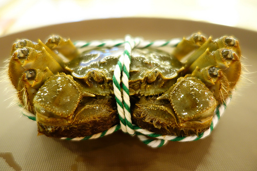 Crabby-Shanghai-Hairy-Crab.jpg