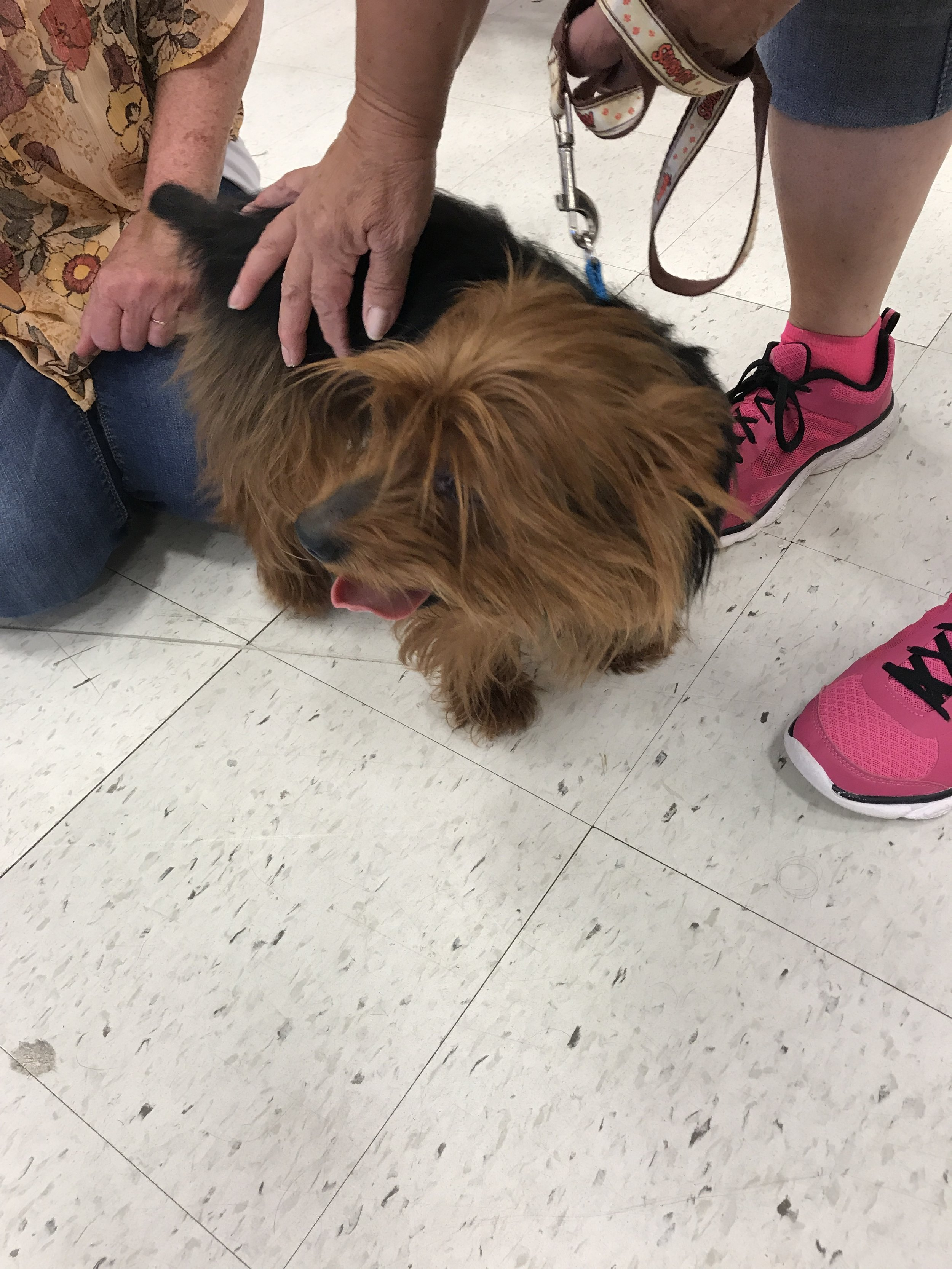 Chewie at the adoption meet and greet event on August 20, 2017