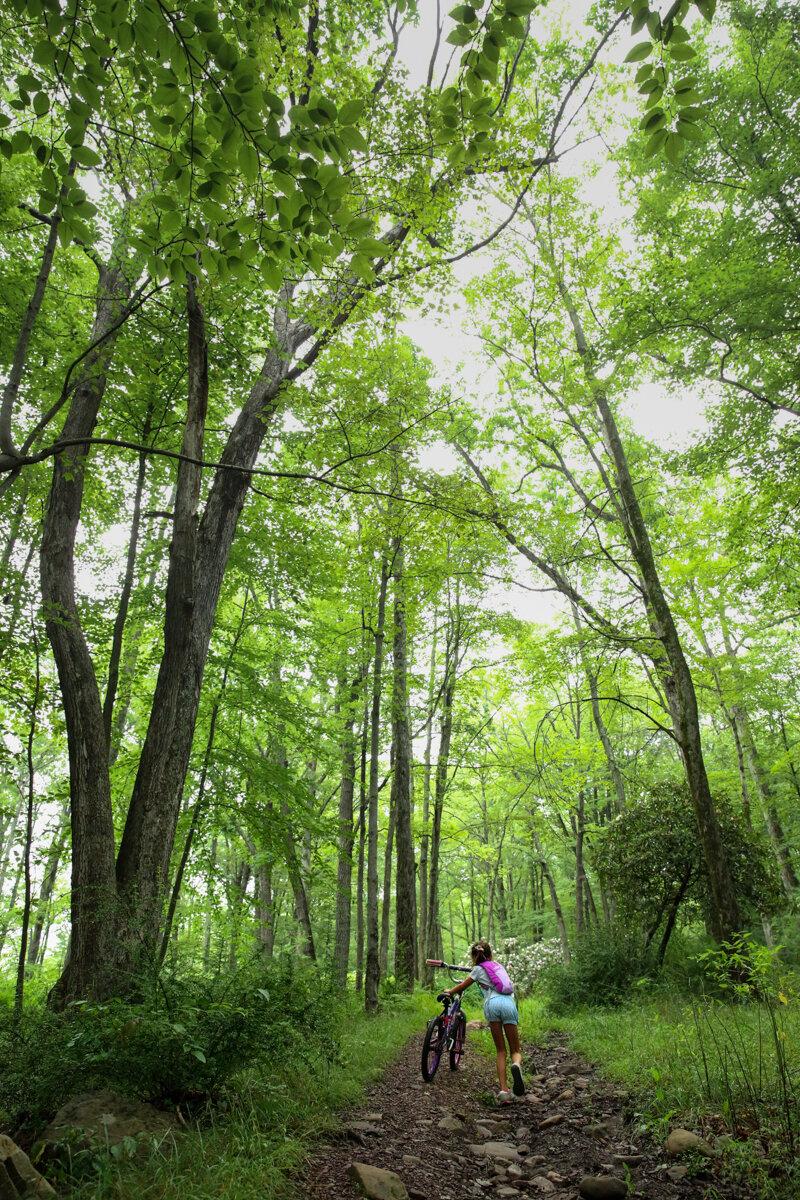 Girl walks her bike up a rocky path between tall wooded