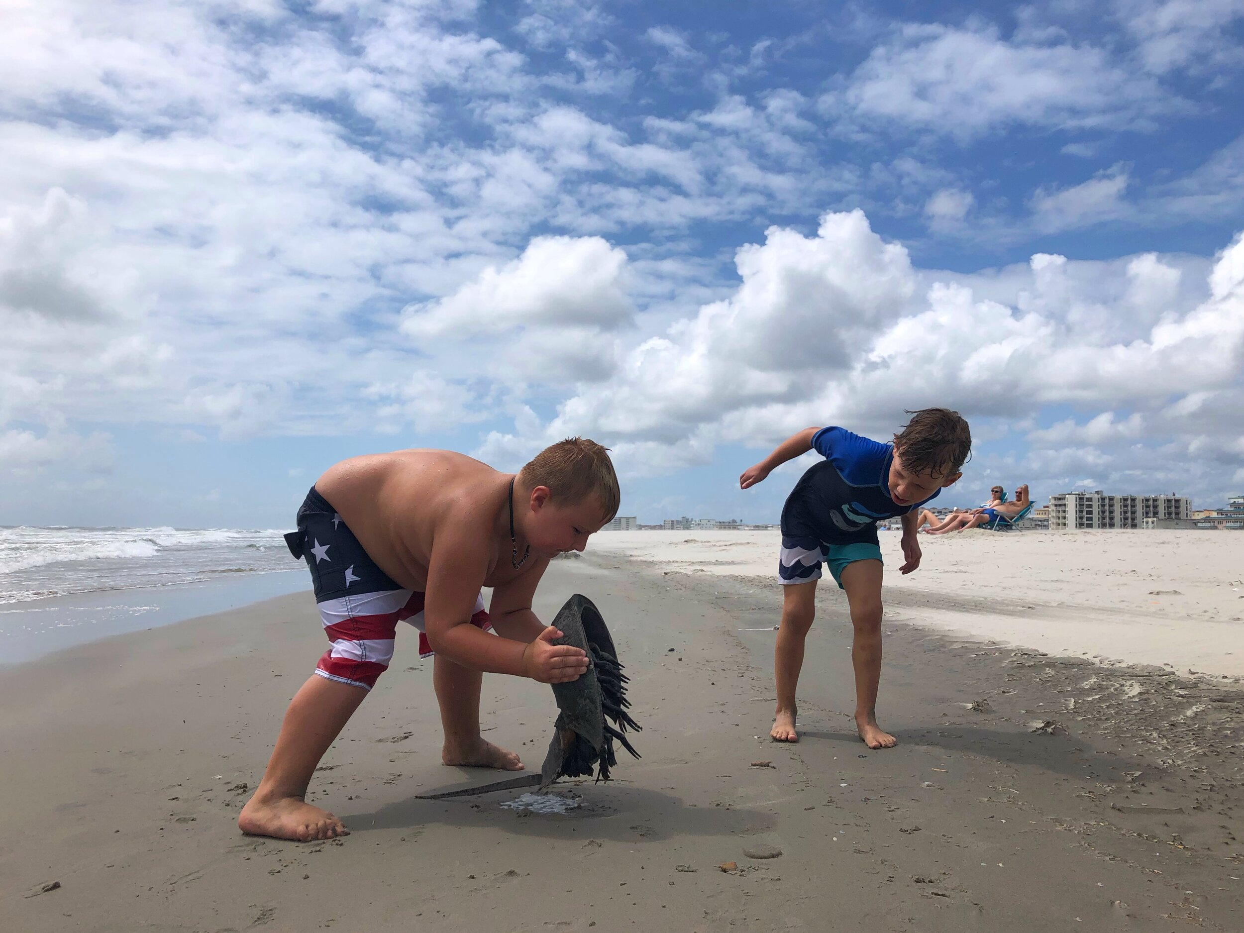 Boy picks up dead horseshoe crab on the beach while other boy watches