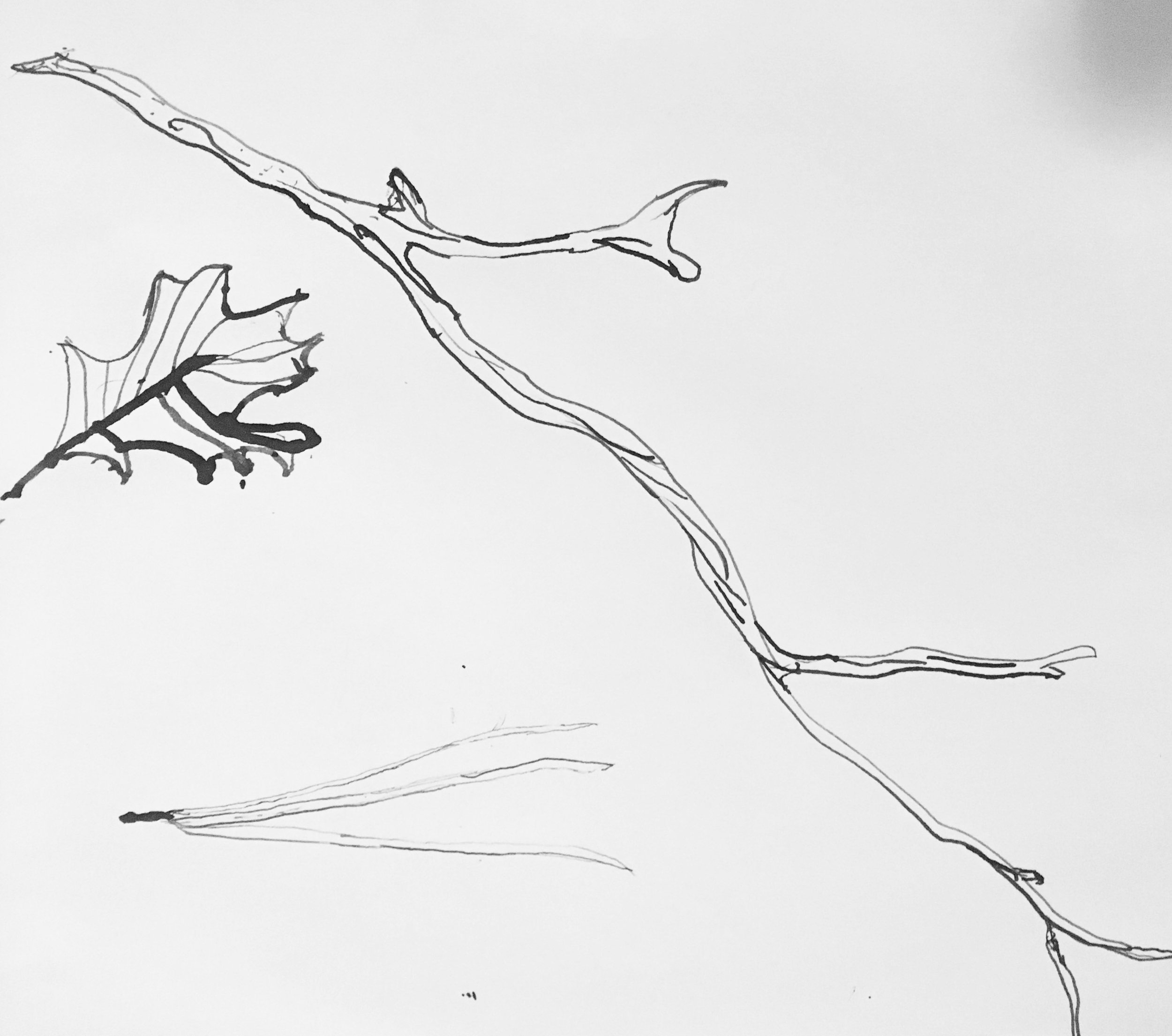 Nature drawing  with found objects in ink