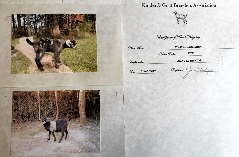 The Certificate of Registry for the Ellis Creek Farm Kinder herd.