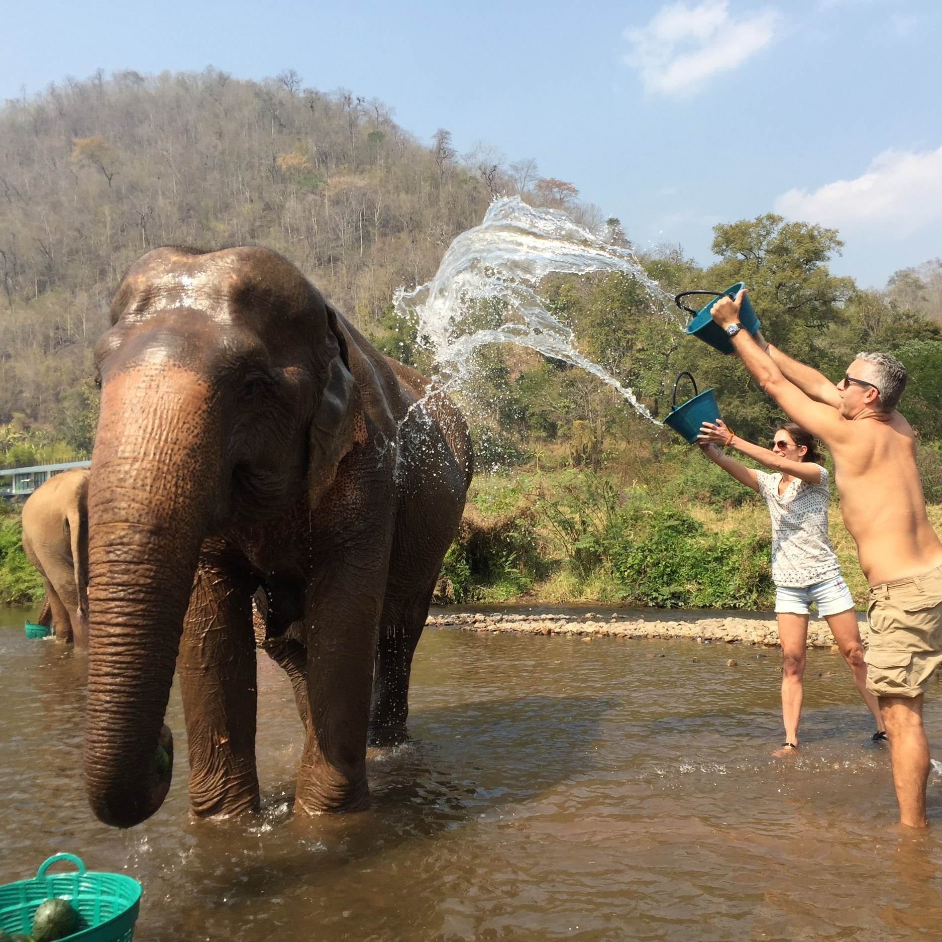 Travel advisors top pick elephant sanctuary
