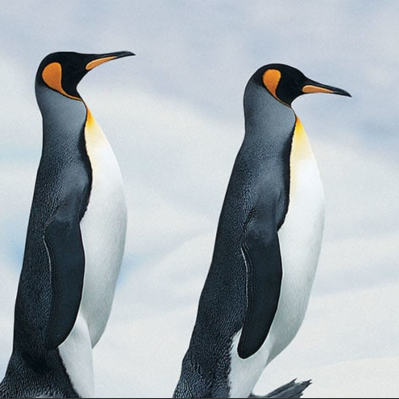 Silversea Expeditions Penguins