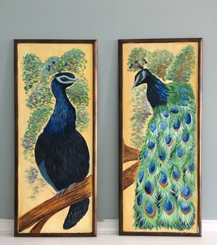 You can see the future wall color in the background behind the Peacock lovebirds.