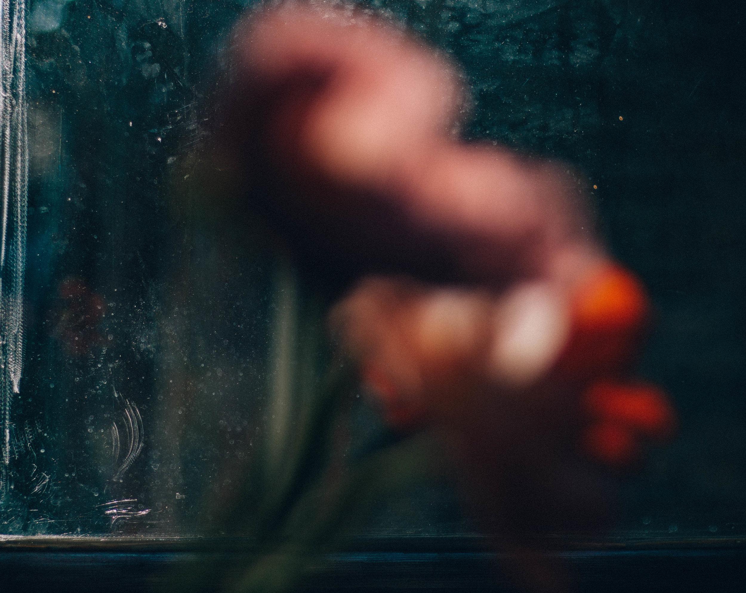 blurred poppies.jpg