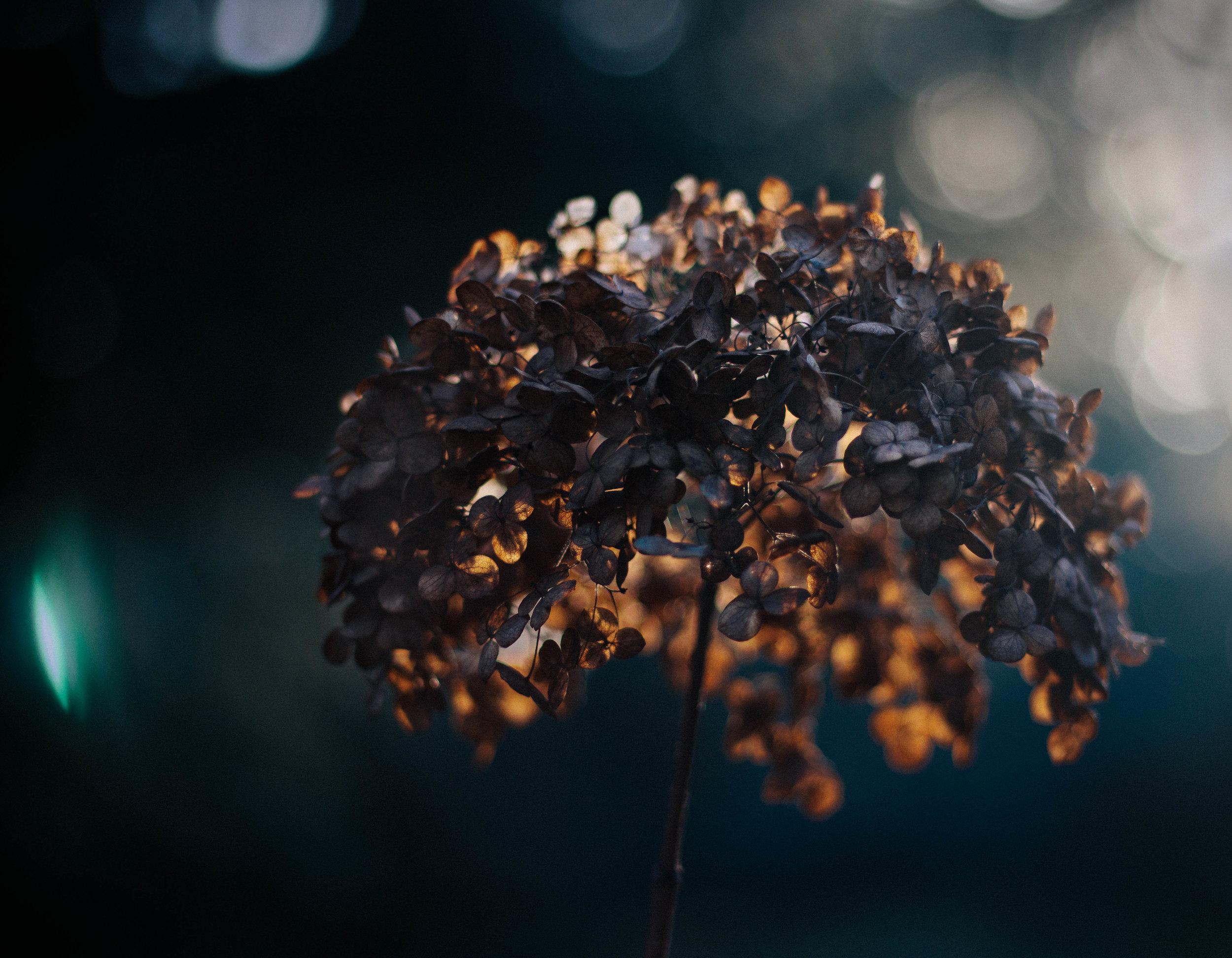 december dead flower.jpg