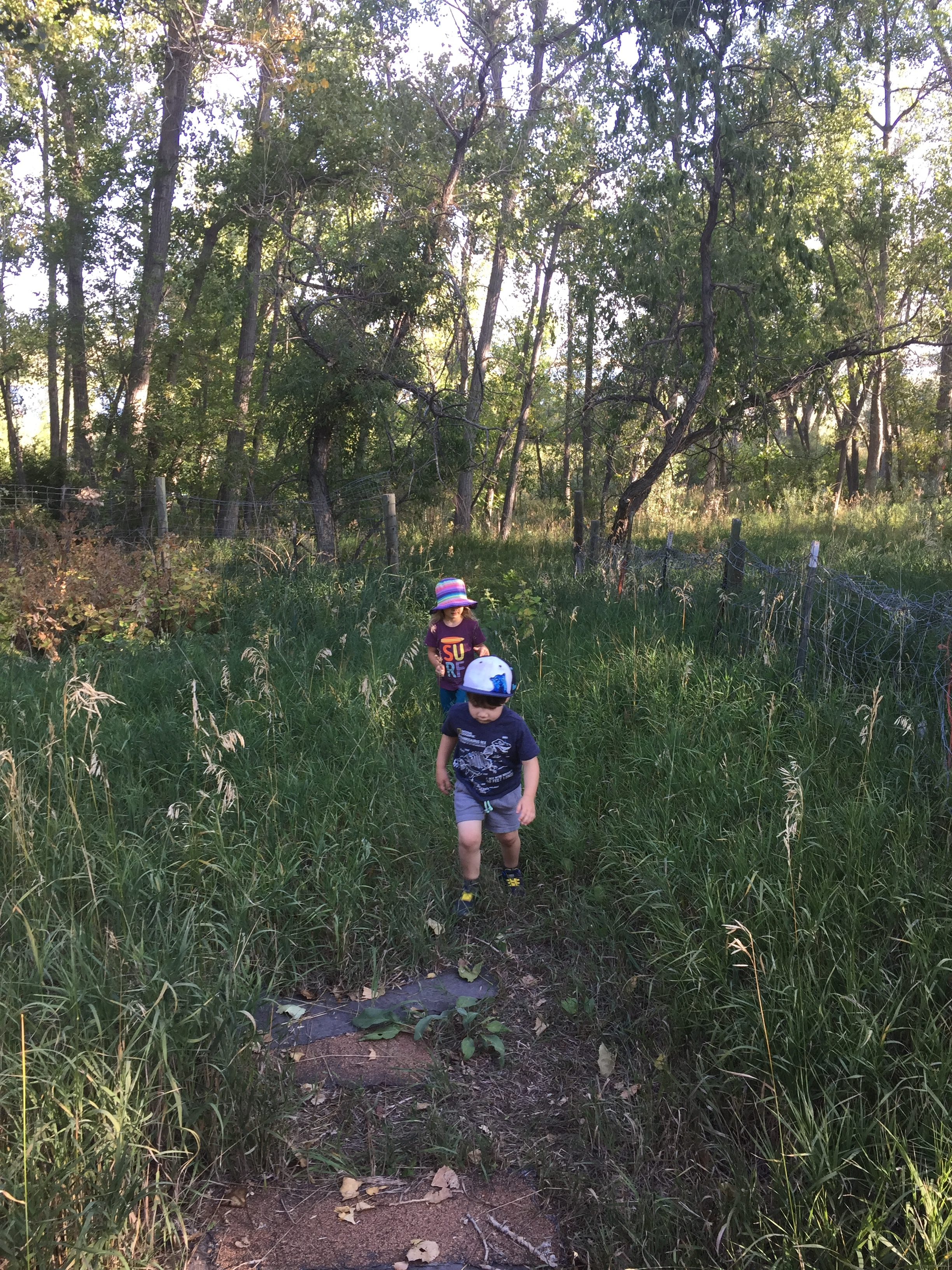 """Exploring the land means finding interesting things like the """"prickle ball"""" seeds that look and feel just like Velcro. We saw plenty of these near the """"cow shed."""""""