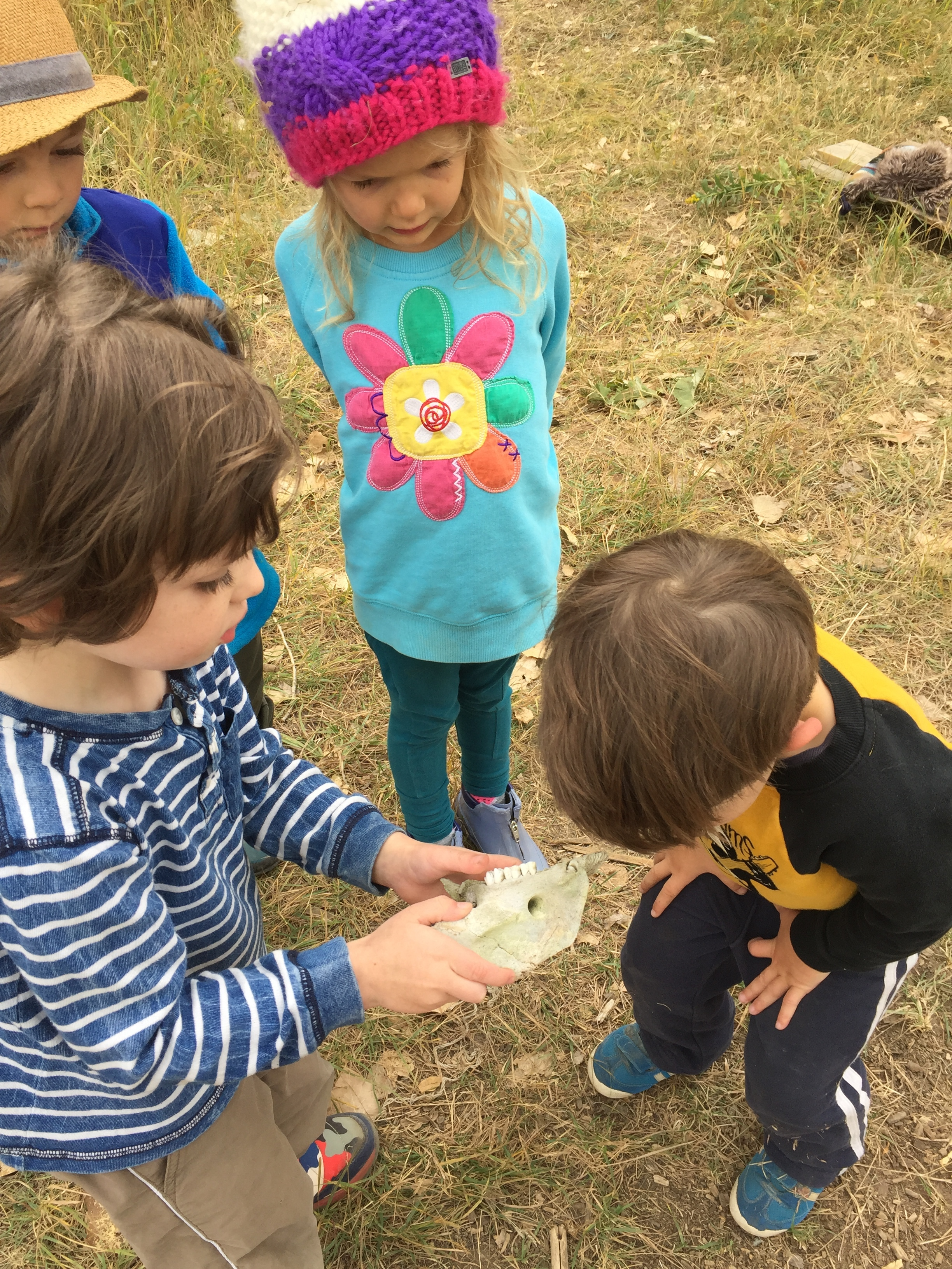 Very respectful turn-taking: examining a jaw bone we discovered. What could it be from?