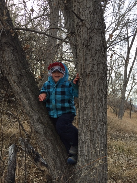 A dog in a tree? Who knew dogs were such adept climbers! Tree-climbing gives this three-year-old plenty of confidence and a special place to call his own.