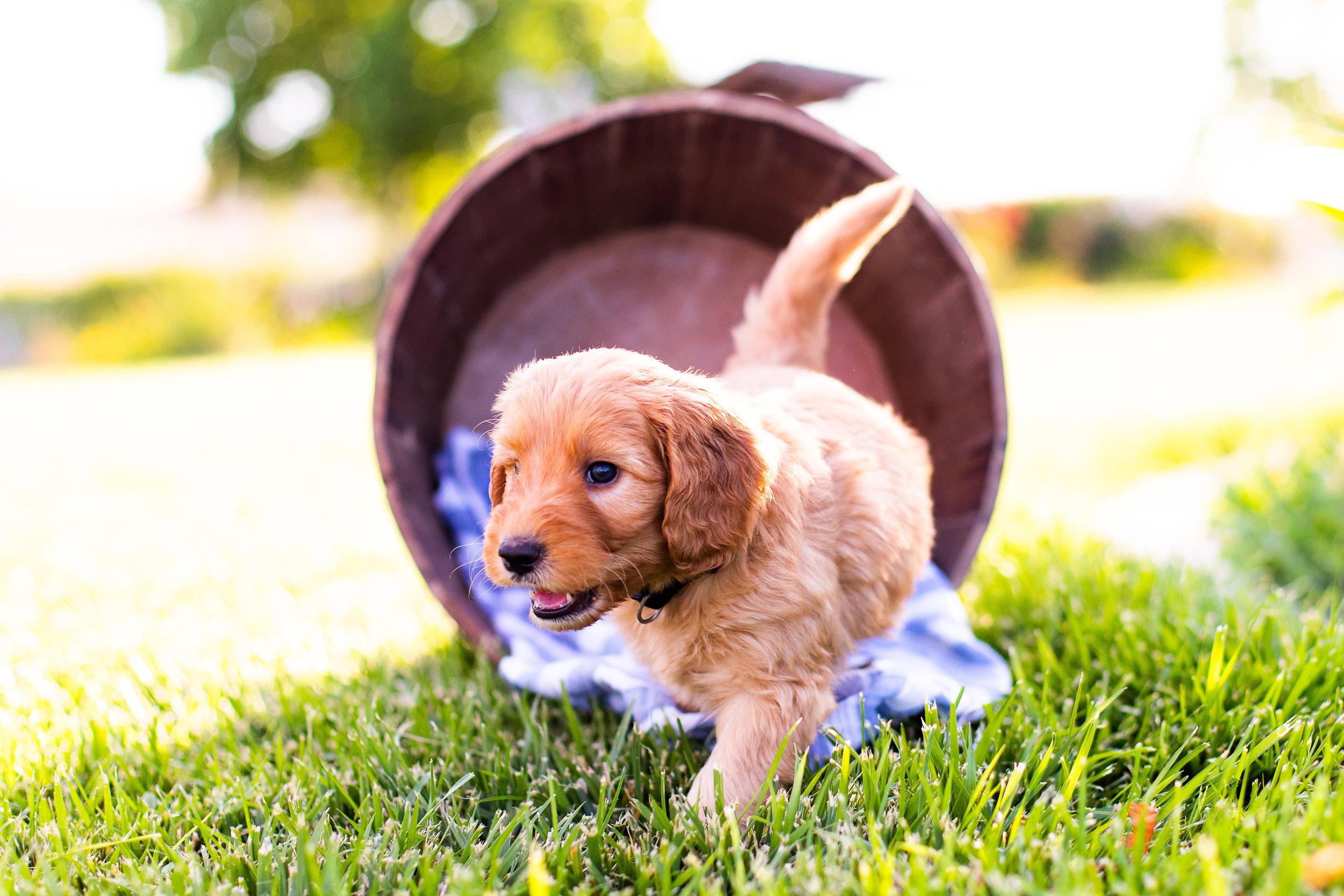 Puppies-12.jpg