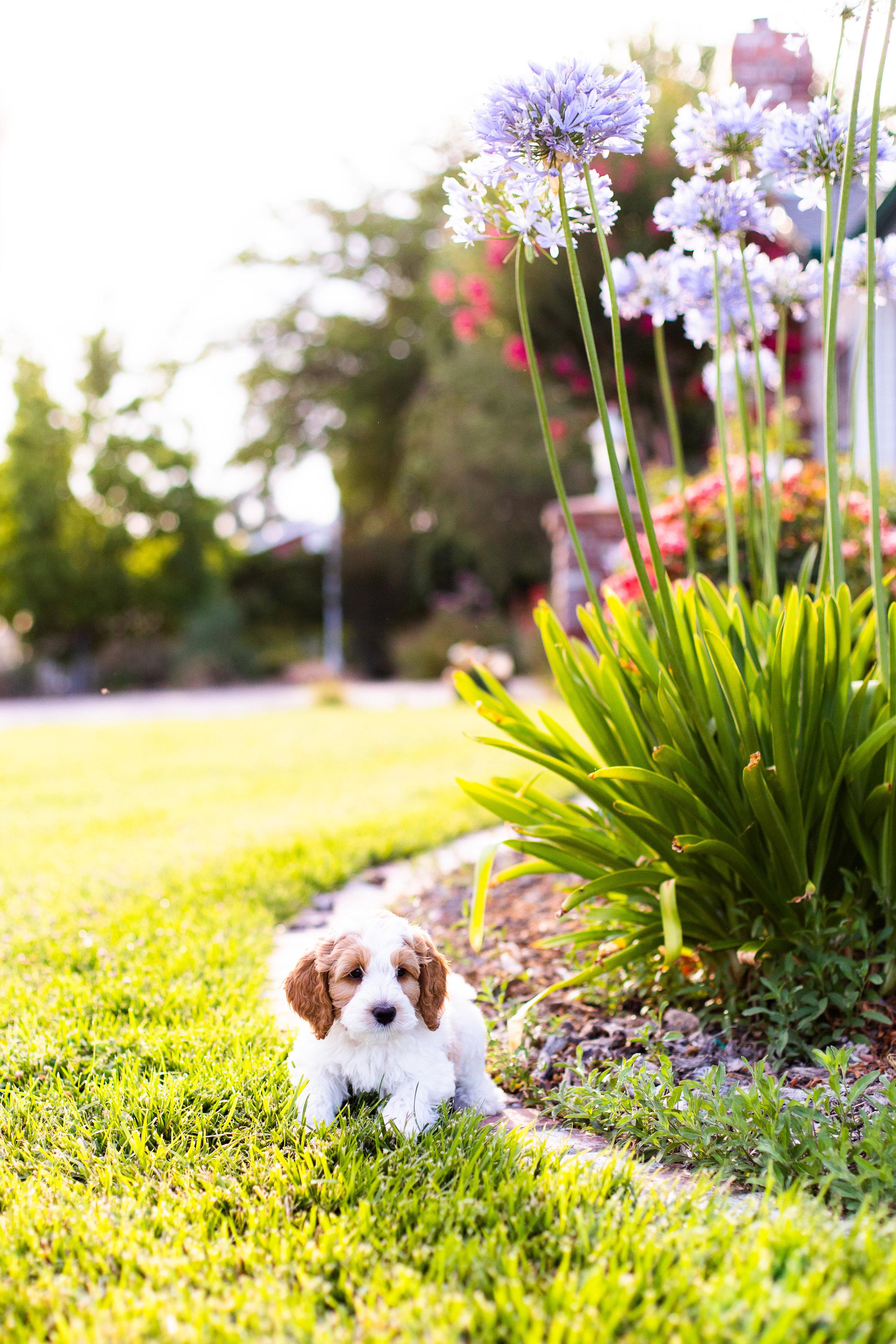 Puppies-6.jpg
