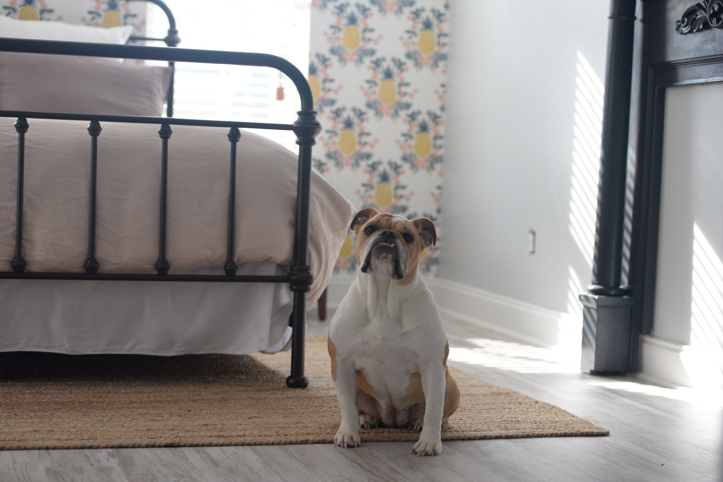 bulldog master bedroom