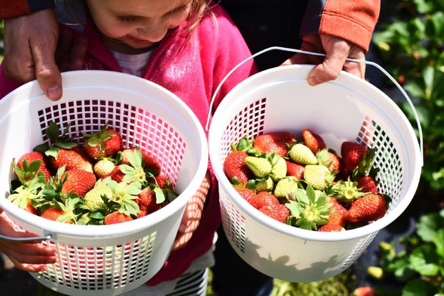 strawberries 8.jpg