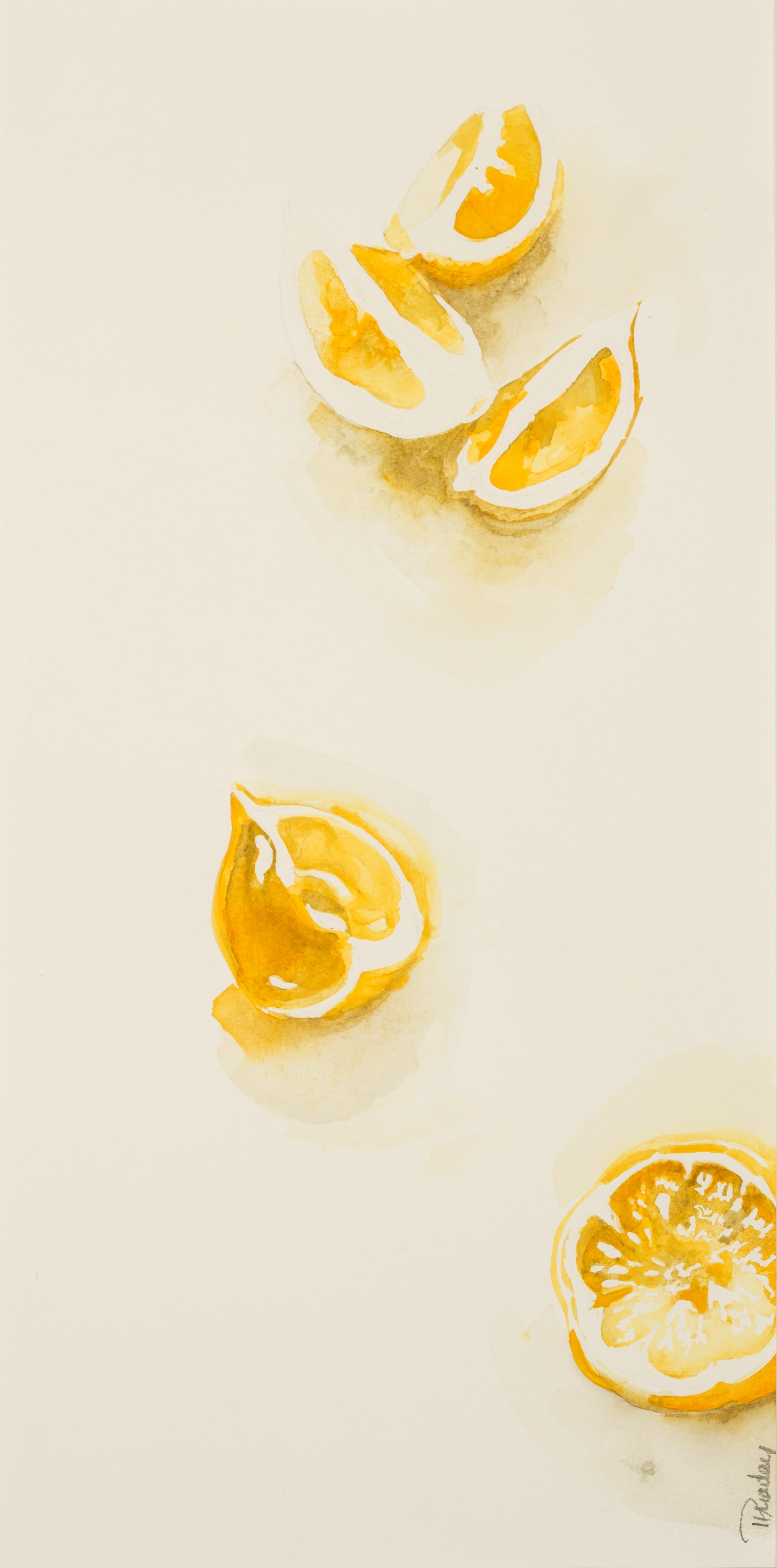 "Lemon Slices  15 1/2 X 25 """