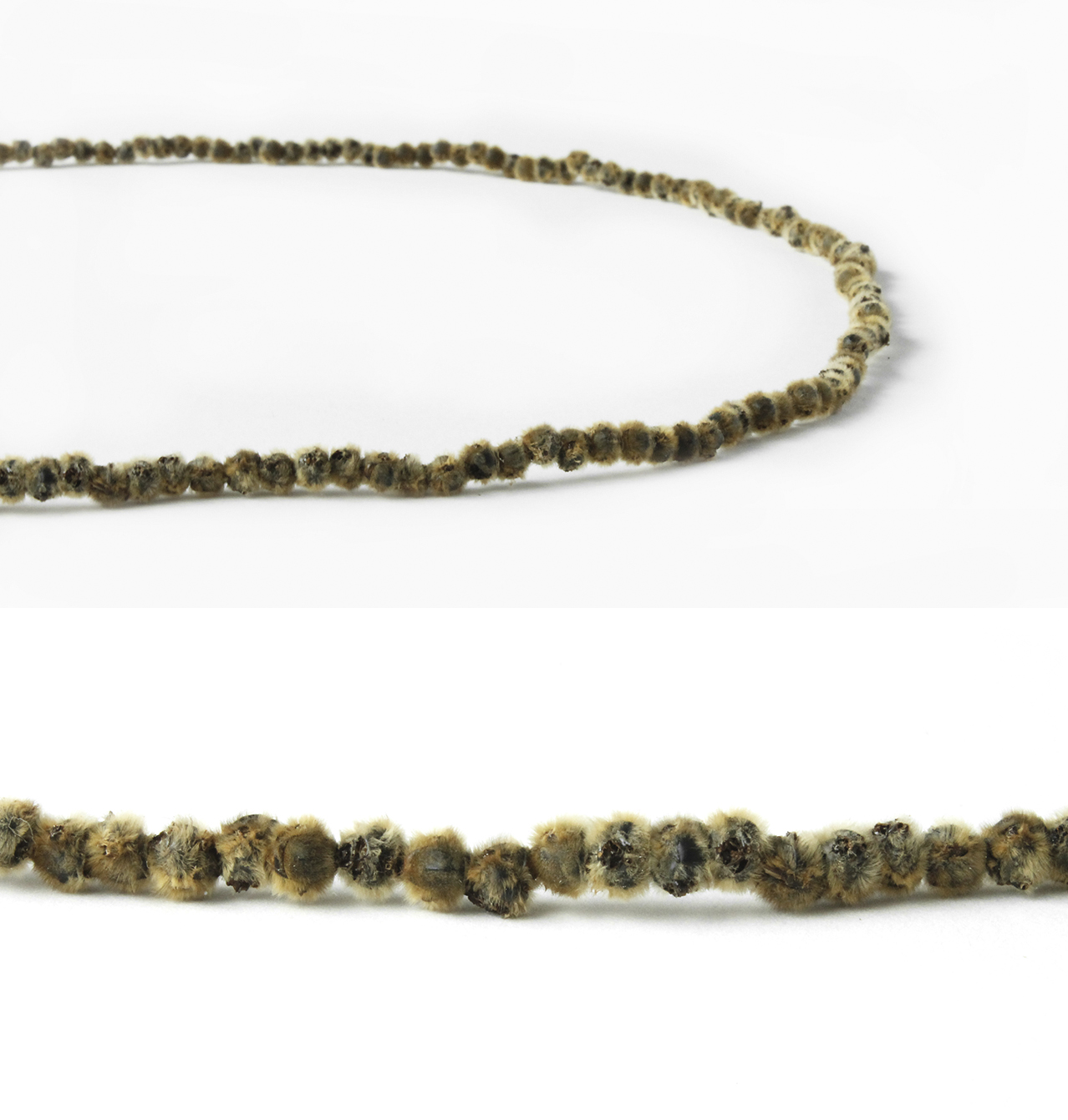 Luci Jockel | Bee Pearl Necklace