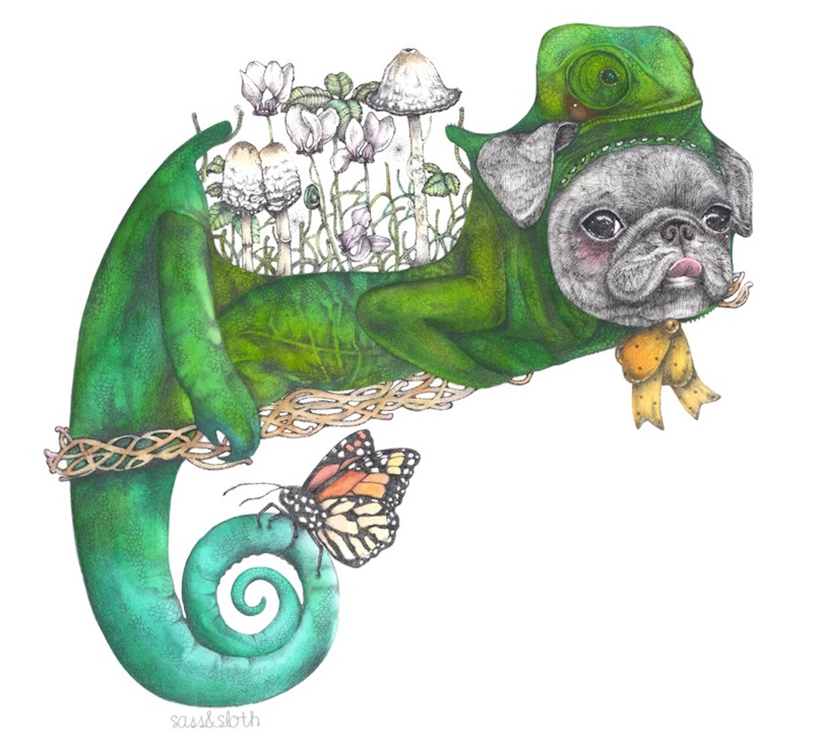 Pugmeleon