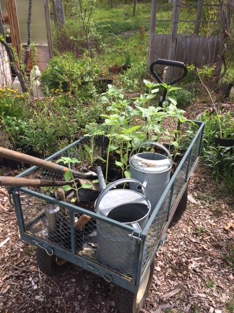 plantings.JPG