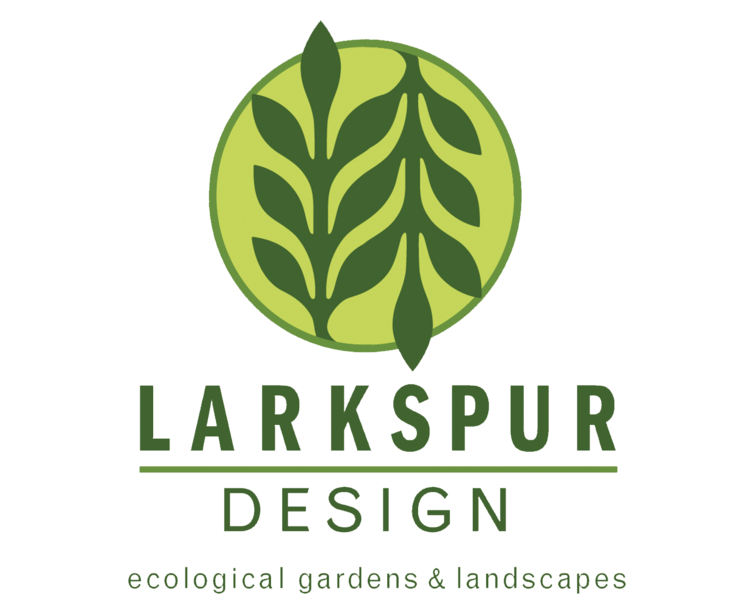 Larkspur design logo