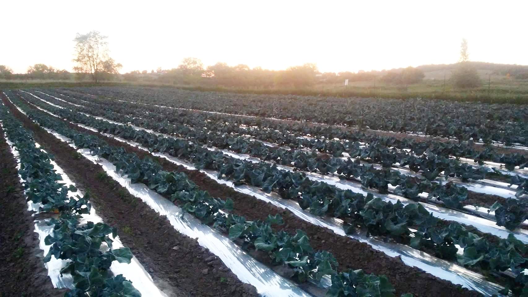 Bluebird Farms