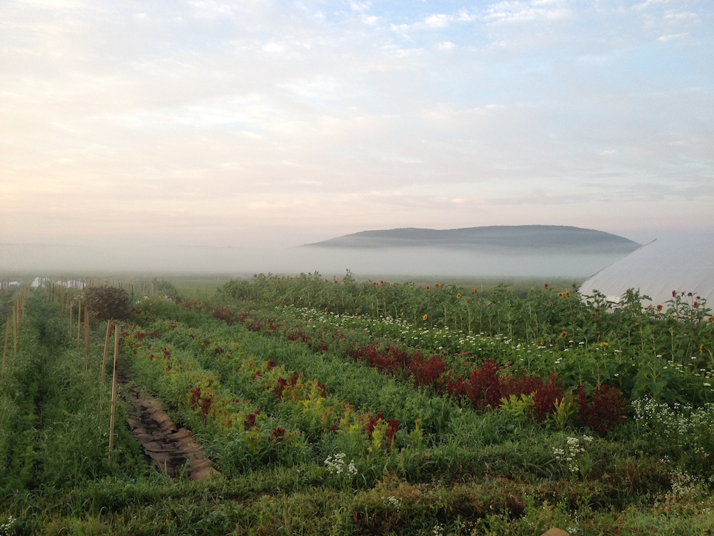 Rise and Root Farm. Image by Ethan Harrison