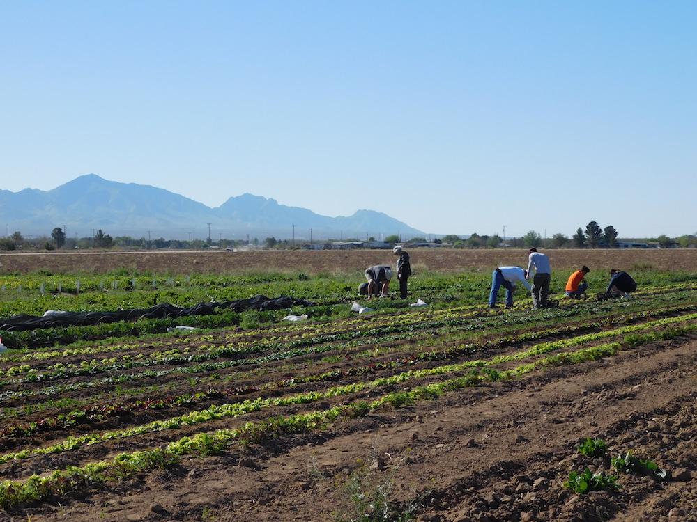 La Semilla Farm. Image by Olivia Dominguez.