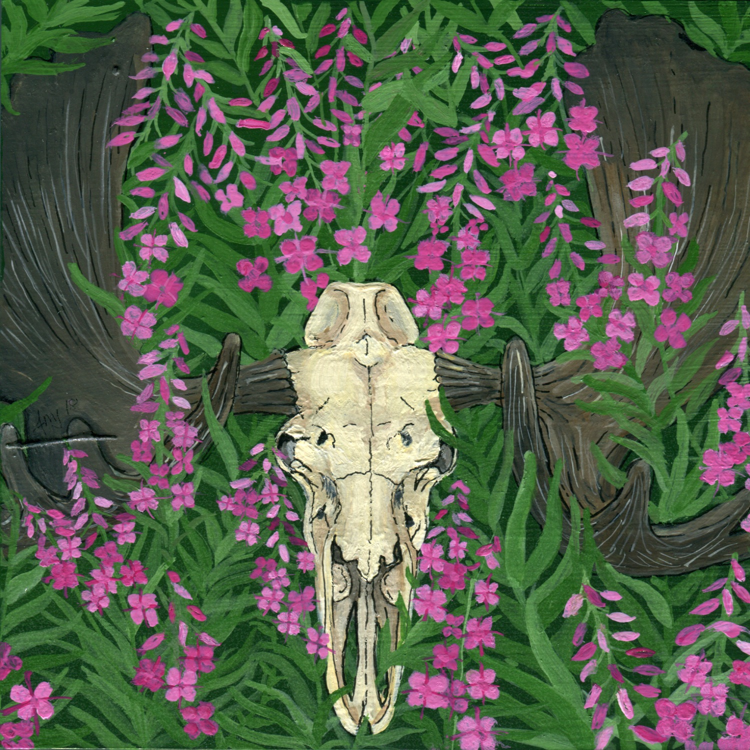 Moose skull with Fireweed