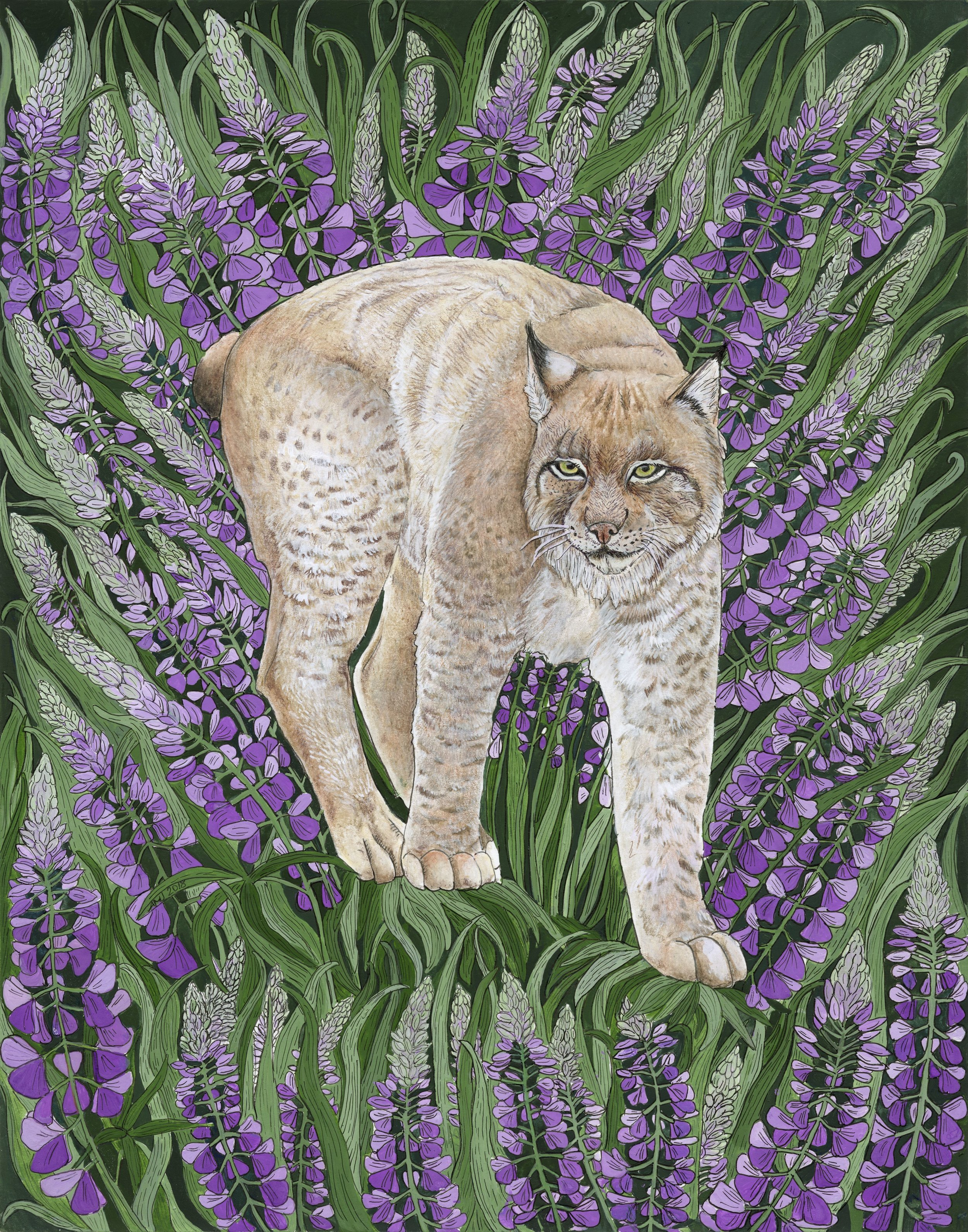Lynx with Purple Lupine