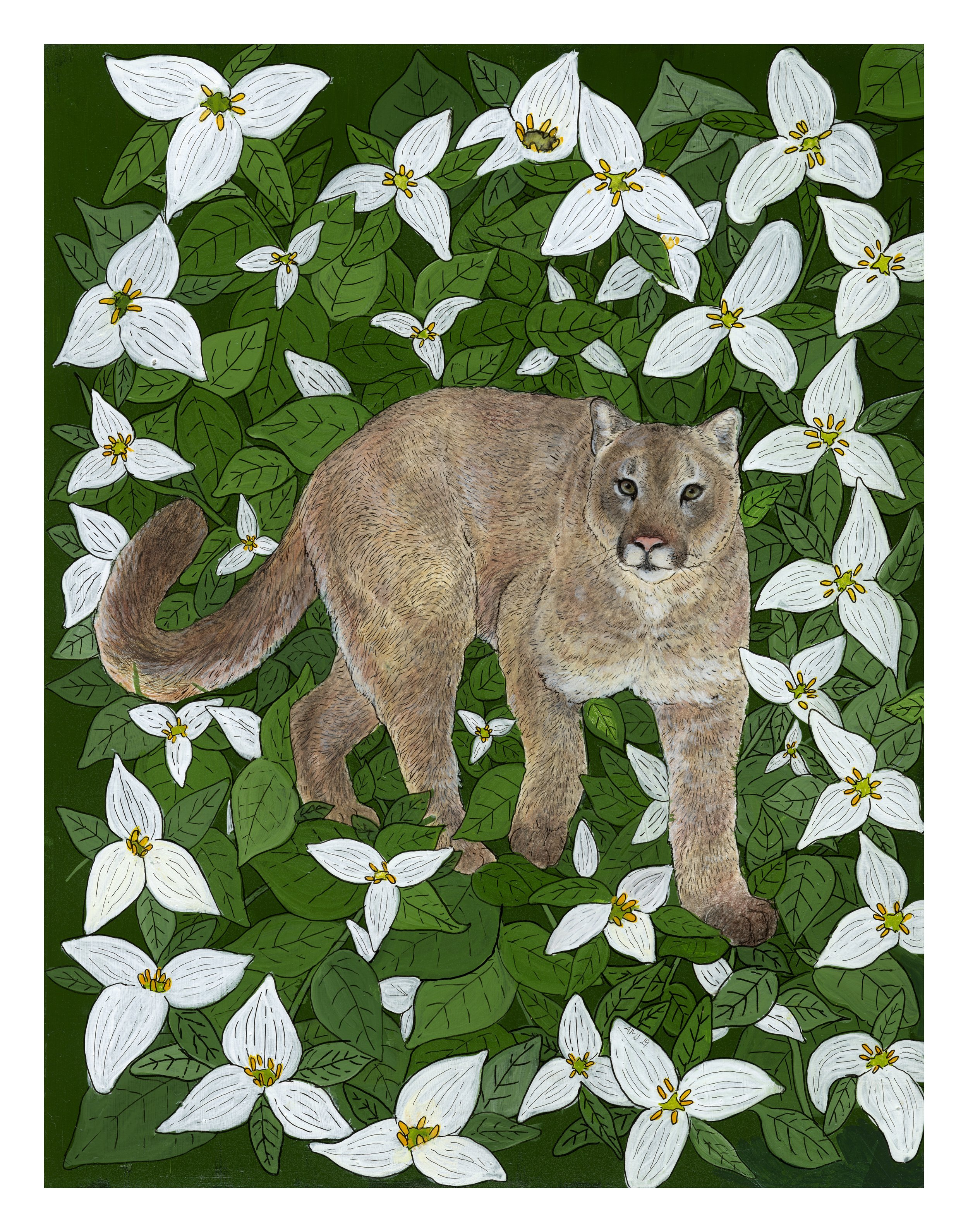 Cougar with Western White Trillium